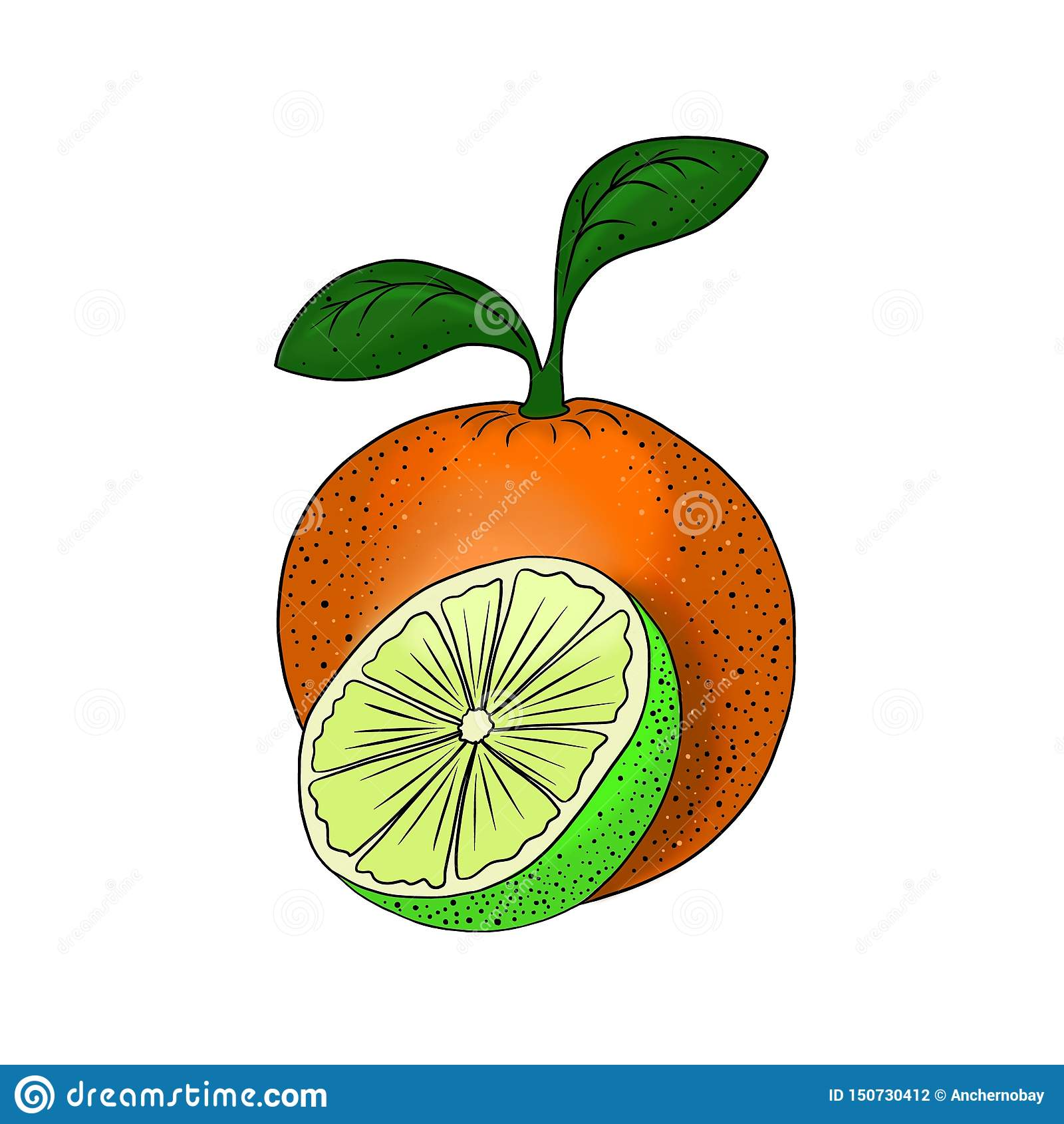 Beståndsdel för mat för orange illustration för limefrukt för fruktcitrus vegetarisk sund för design som isoleras på vit bakgrund