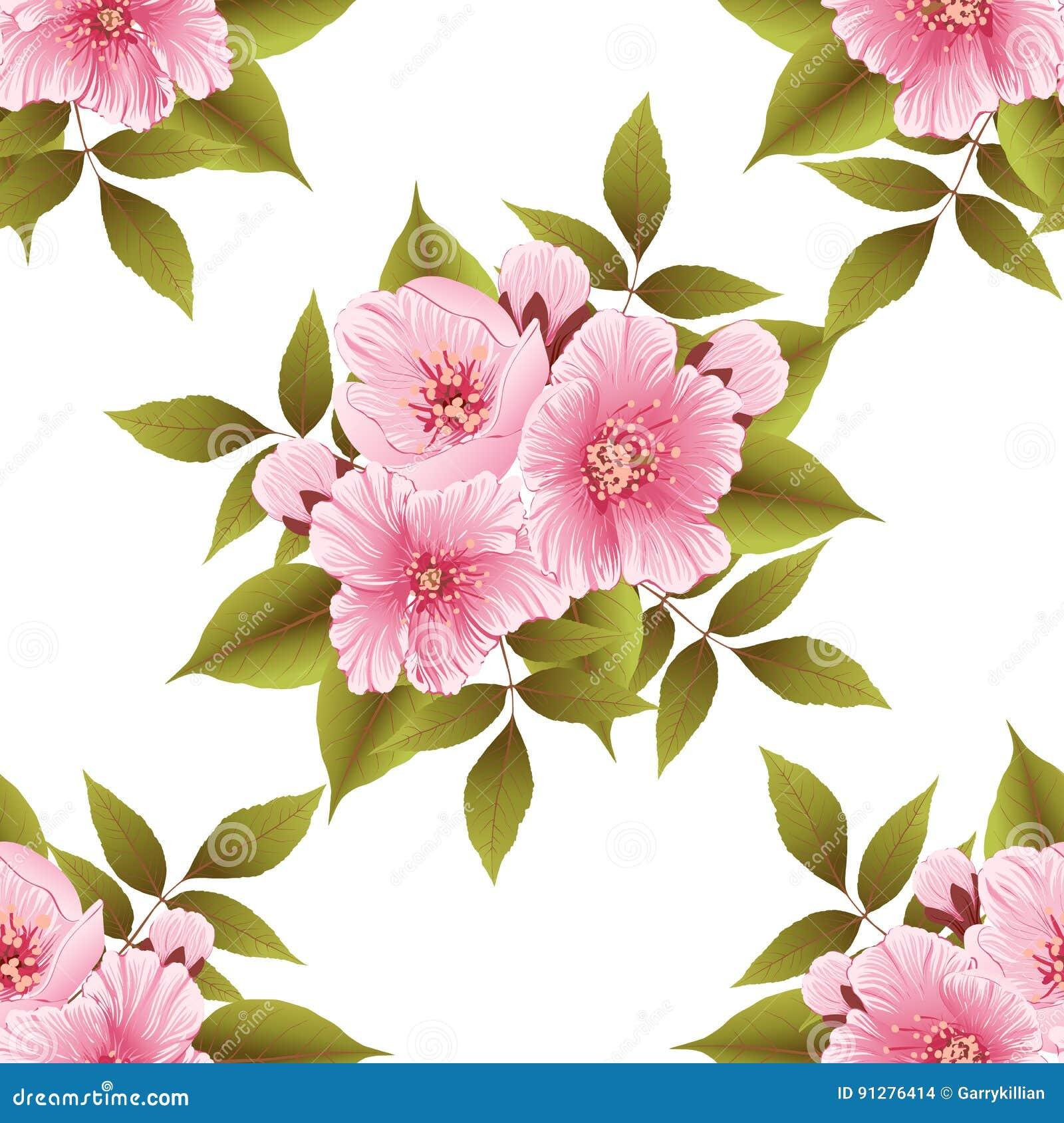 Beståndsdel för modell för vektorsakura blomma sömlös Elegant textur för körsbärsröd blomning för bakgrunder