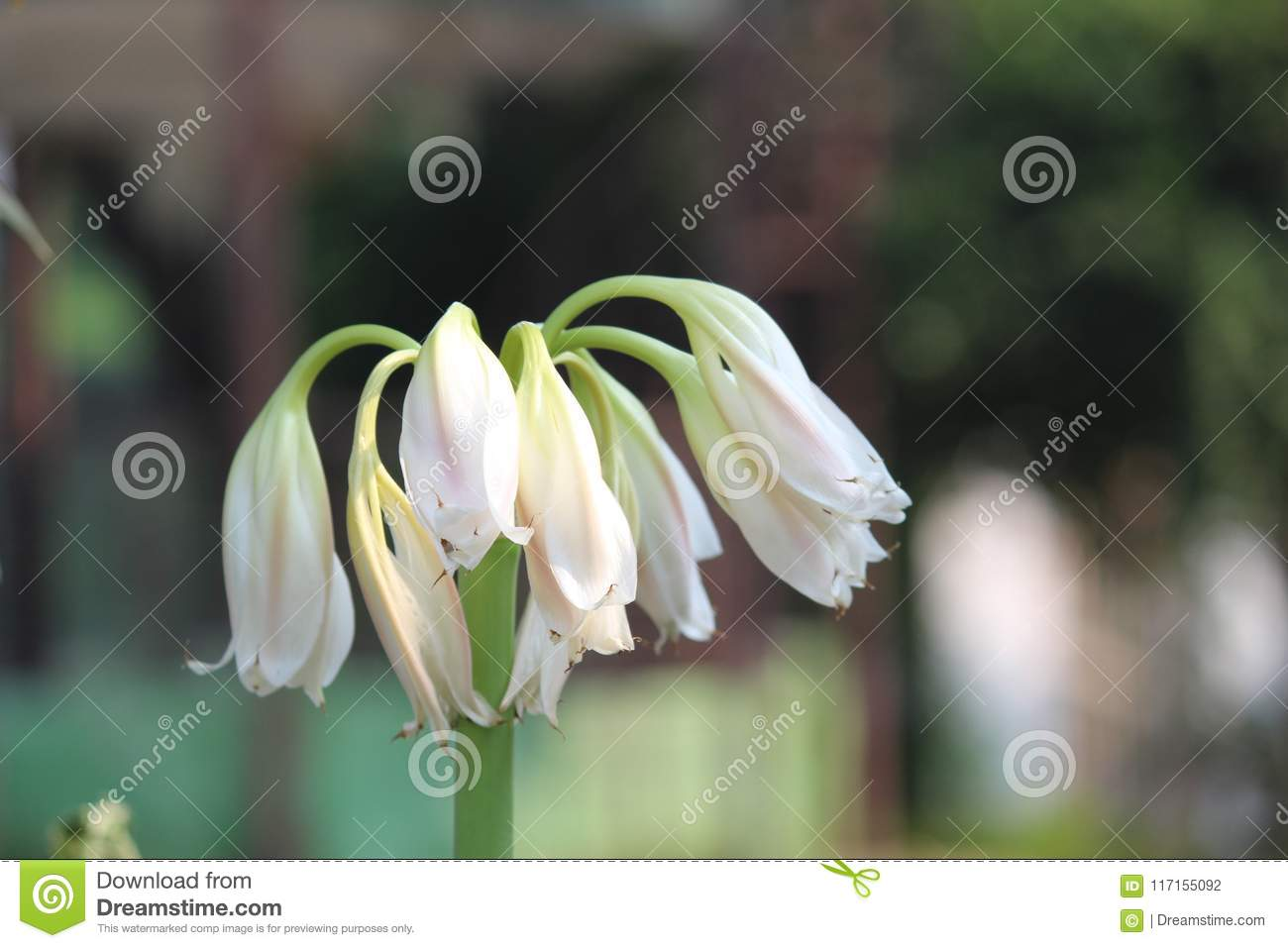 Best flower image use for any purpose stock photo image of makes download best flower image use for any purpose stock photo image of makes purpose izmirmasajfo