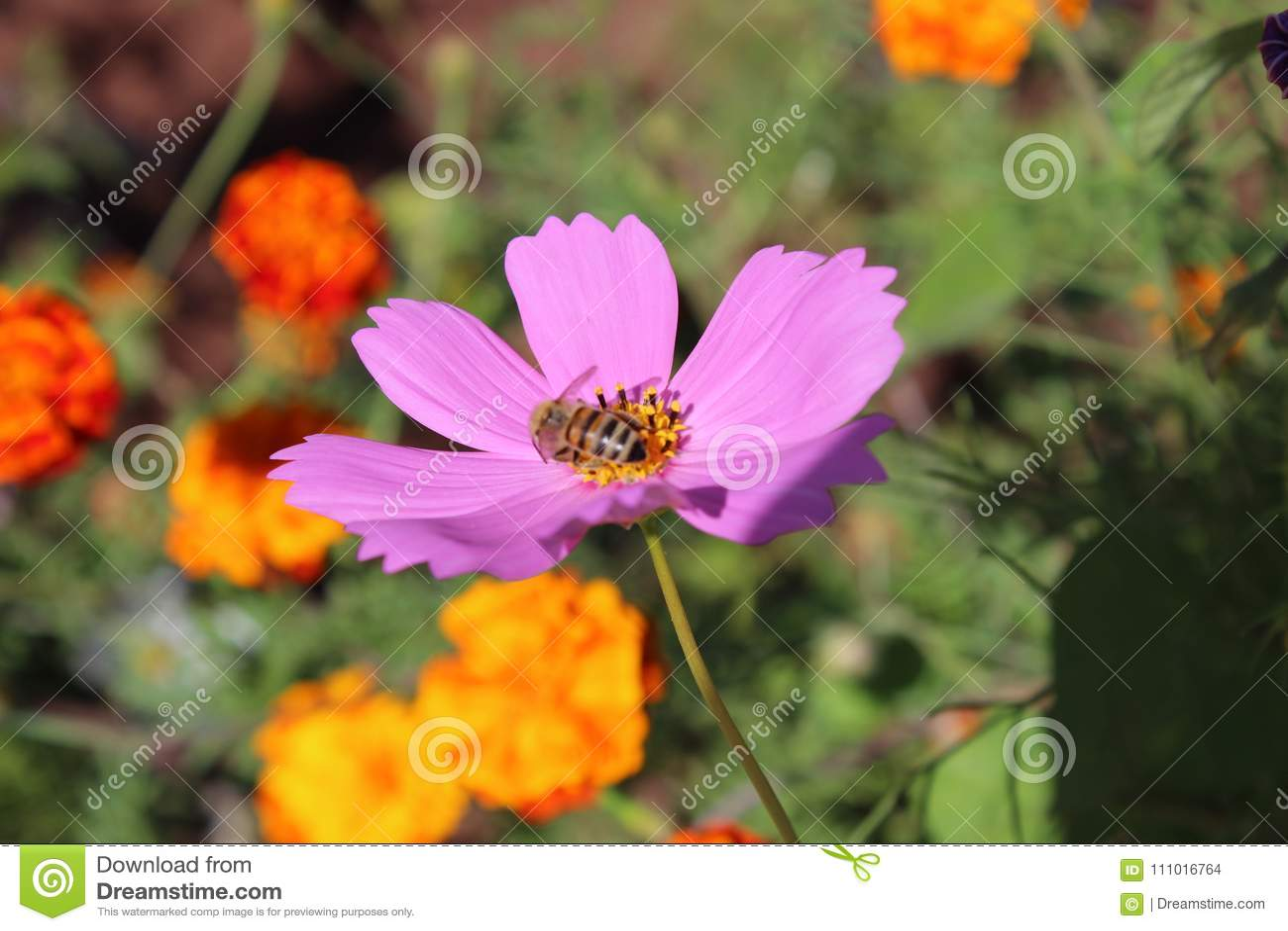 Best Flowertal Flower Stock Photo Image Of Mellow 111016764