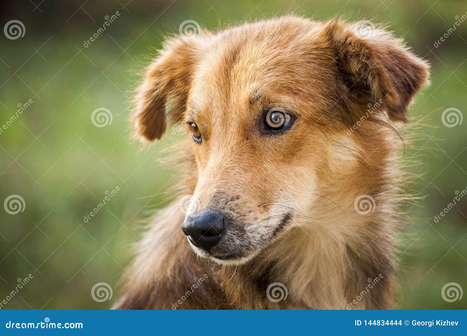 Best friend-dog 2