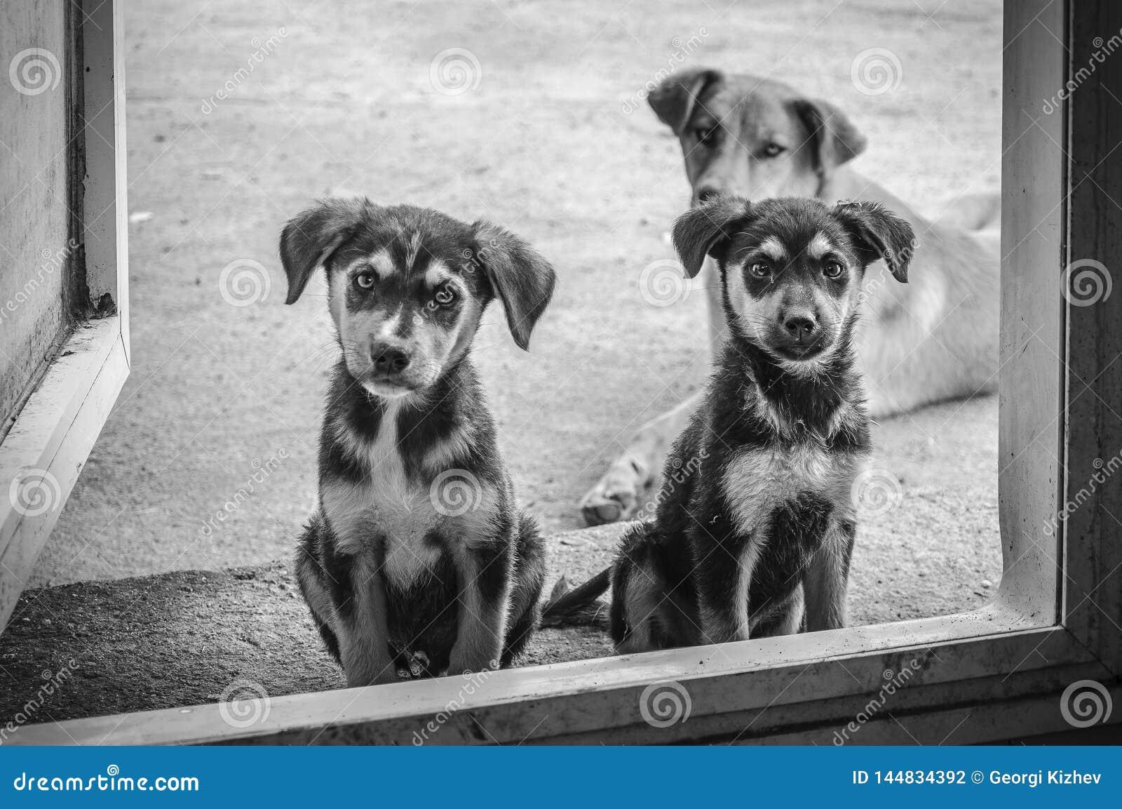 Best friend-three dogs
