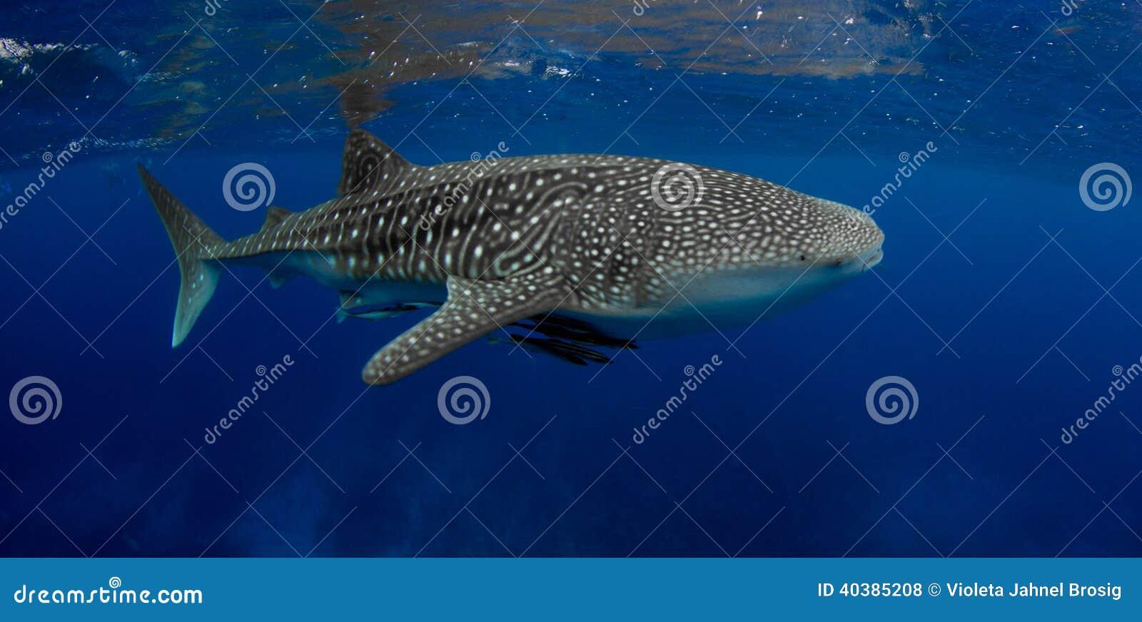 Best whale shark ever