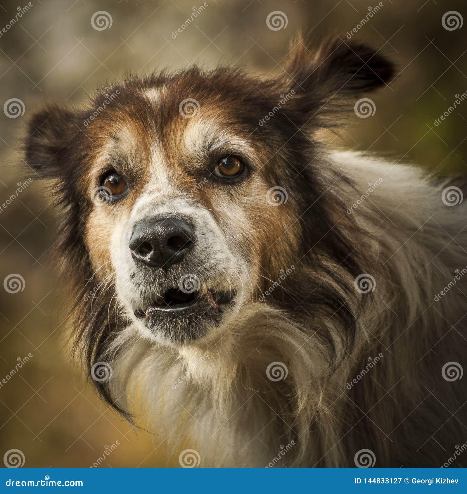 Beste vriend-hond