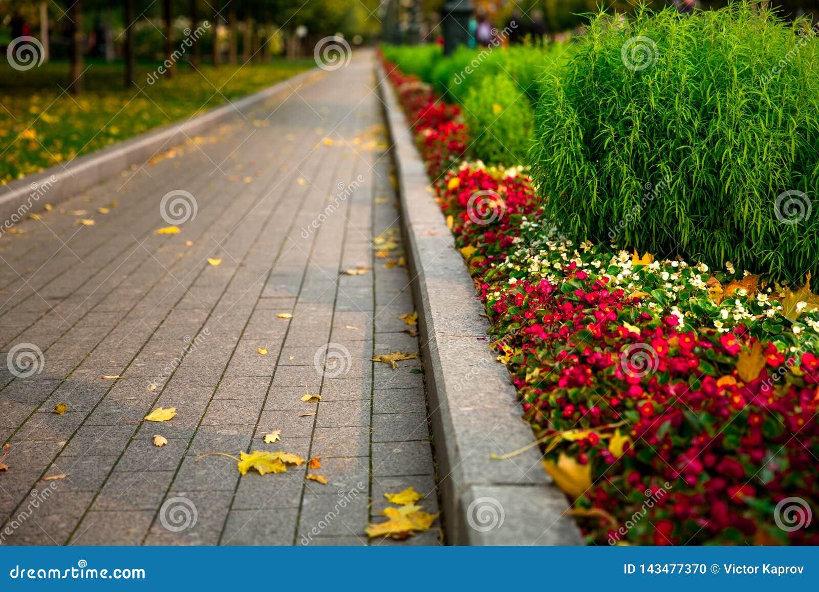 Bestrating in de bloemtuin in de herfst