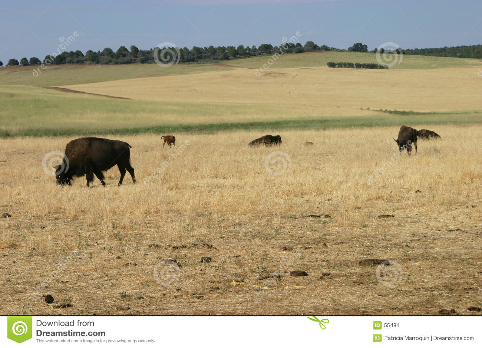 Beta för bufflar