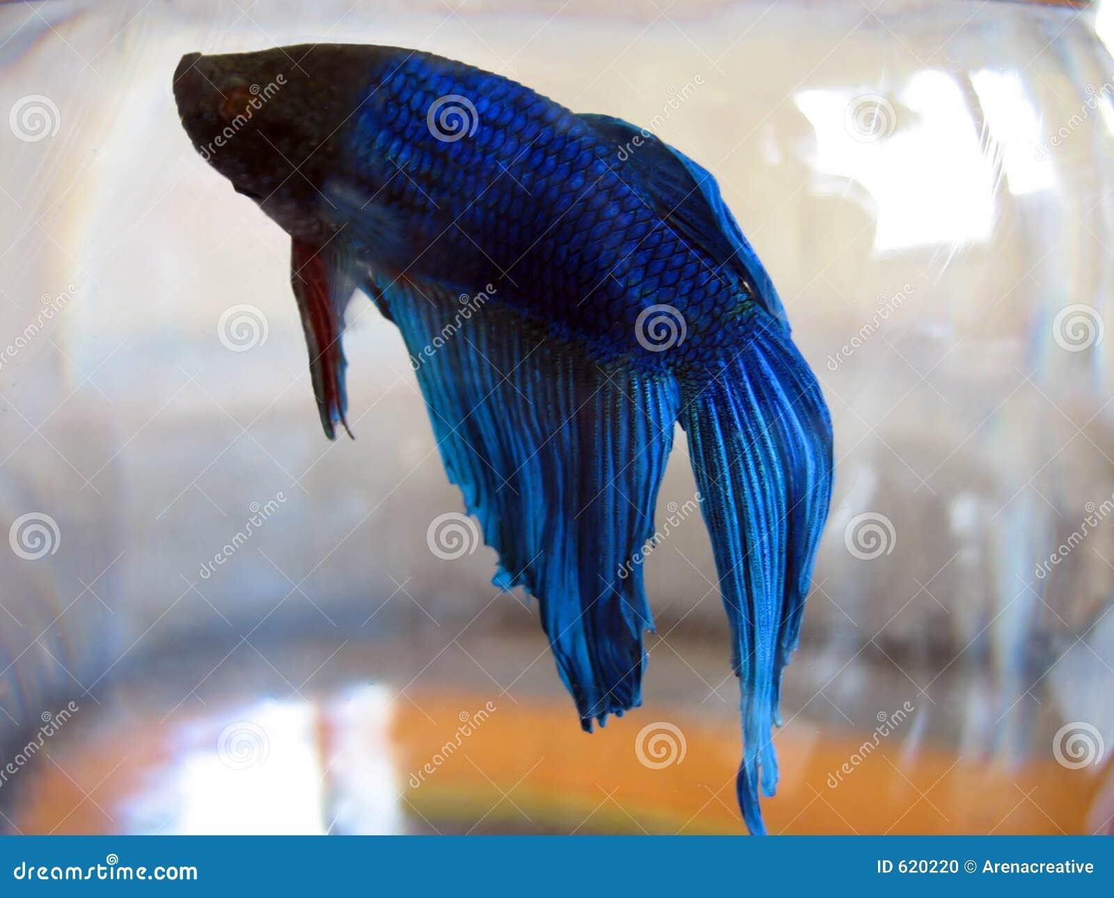 Beta macro dos peixes