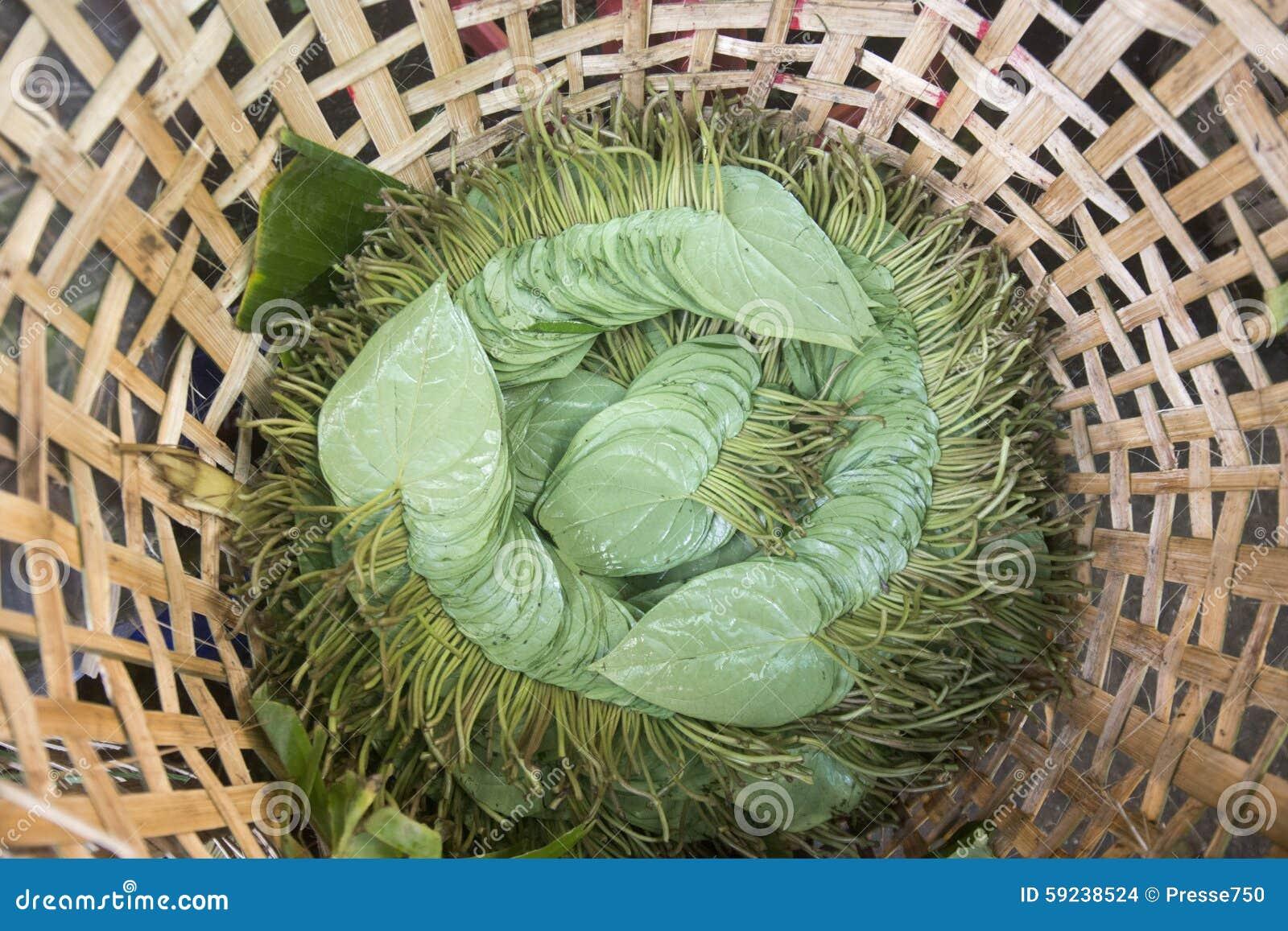 Download BETEL LEAFES DEL MERCADO DE ASIA MYANMAR RANGÚN Foto de archivo - Imagen de betel, departamento: 59238524