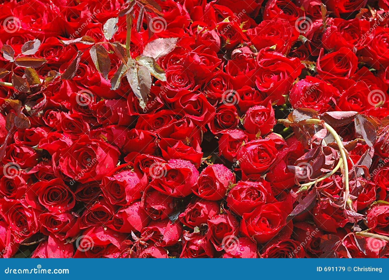 Bett Der Rosen