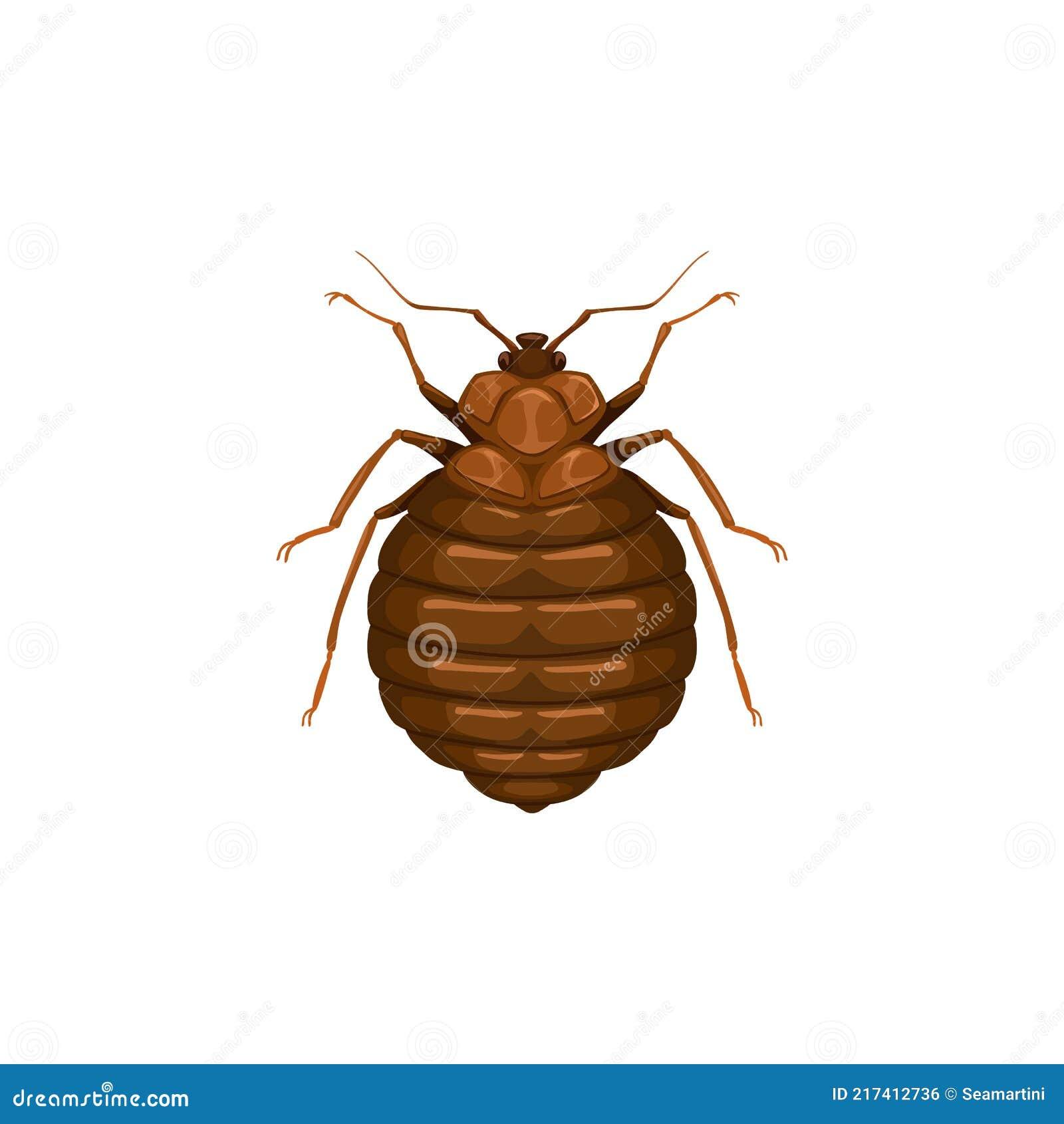 Bett tiere schädlinge im Insekt im