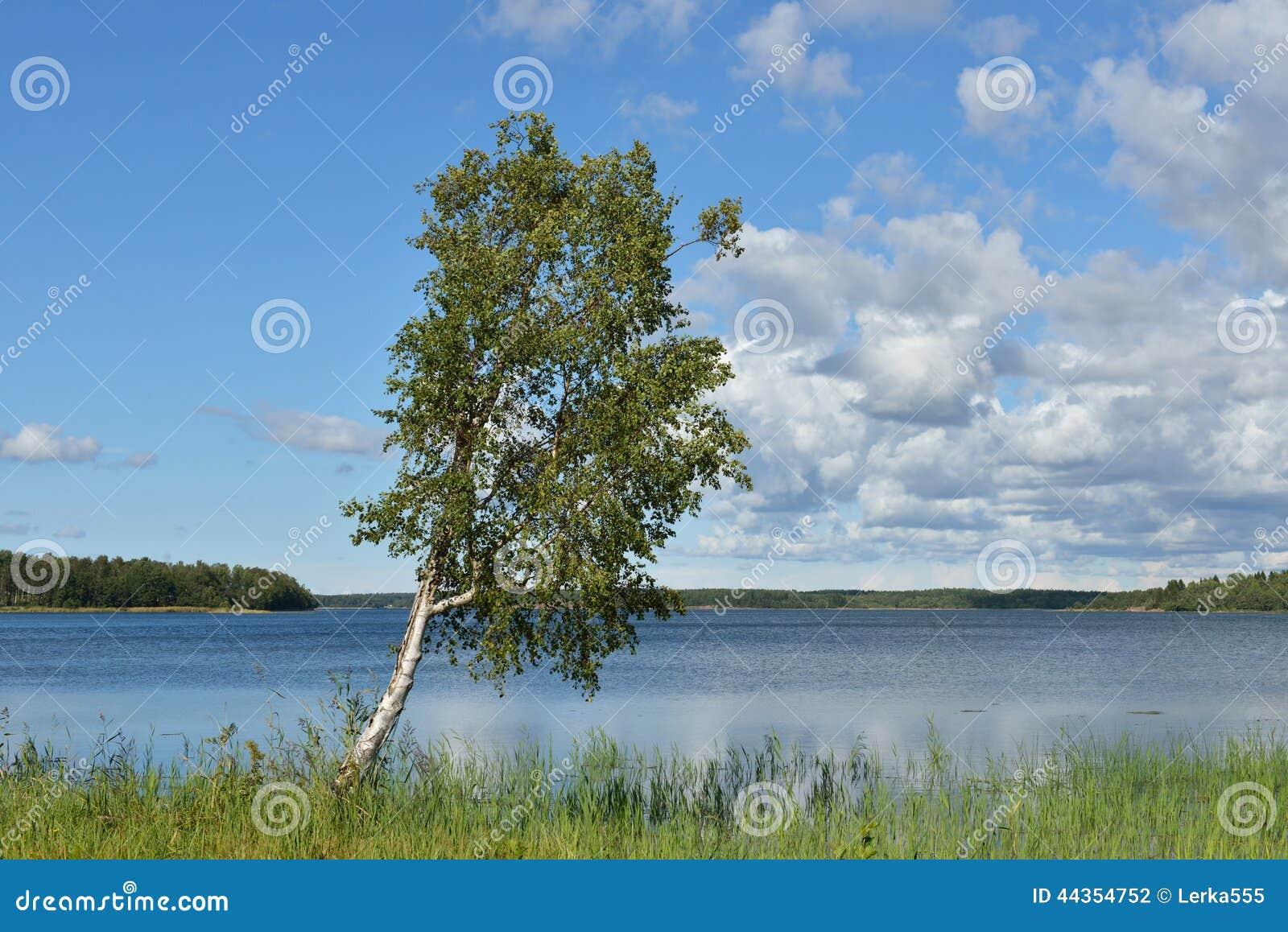 Betulla sulla banca del lago blu