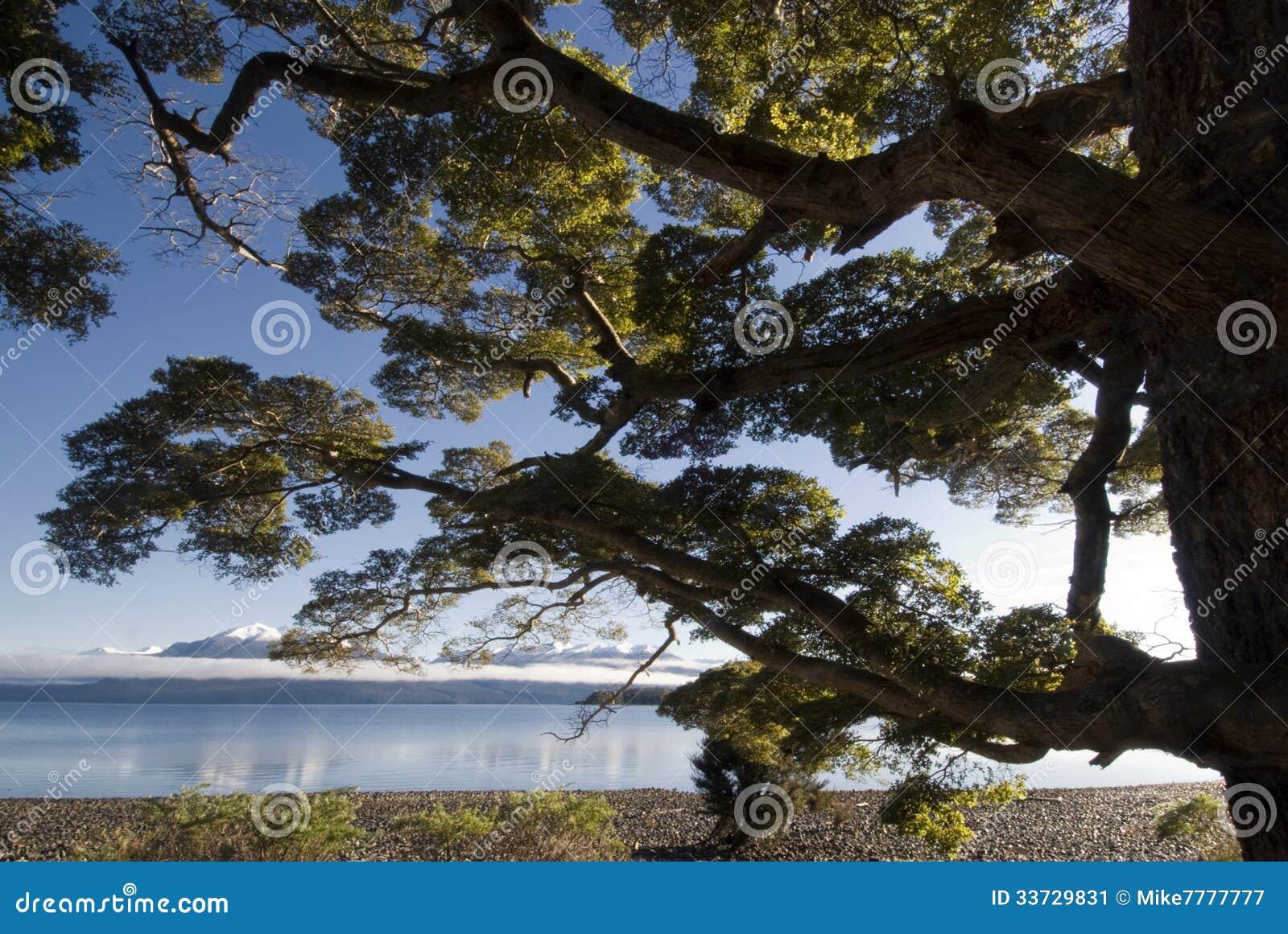 Beukboom op meer Te Anau, Zuideneiland, Nieuw Zeeland
