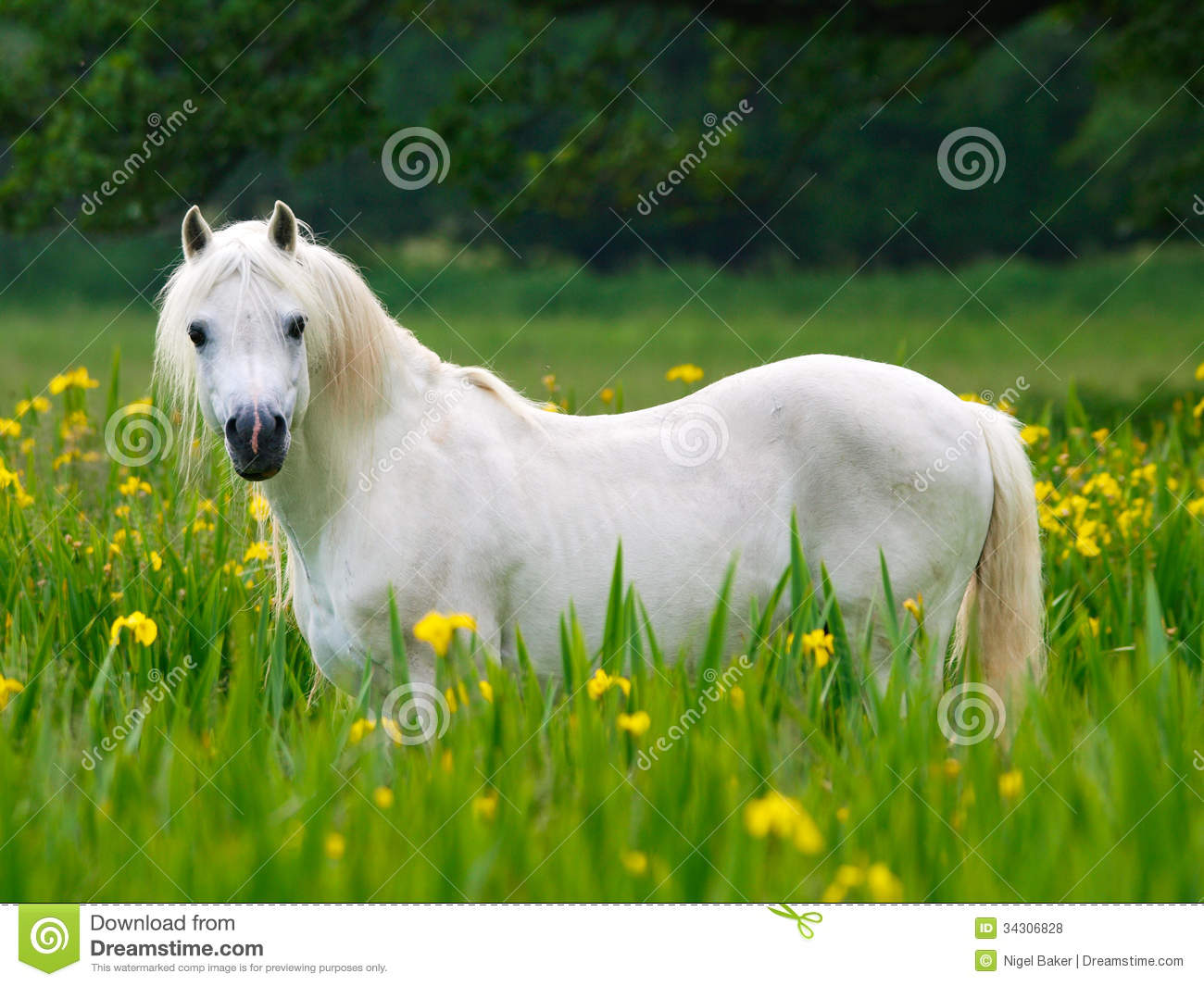 Beutiful beutiful horse royalty free stock photos - image: 34306828