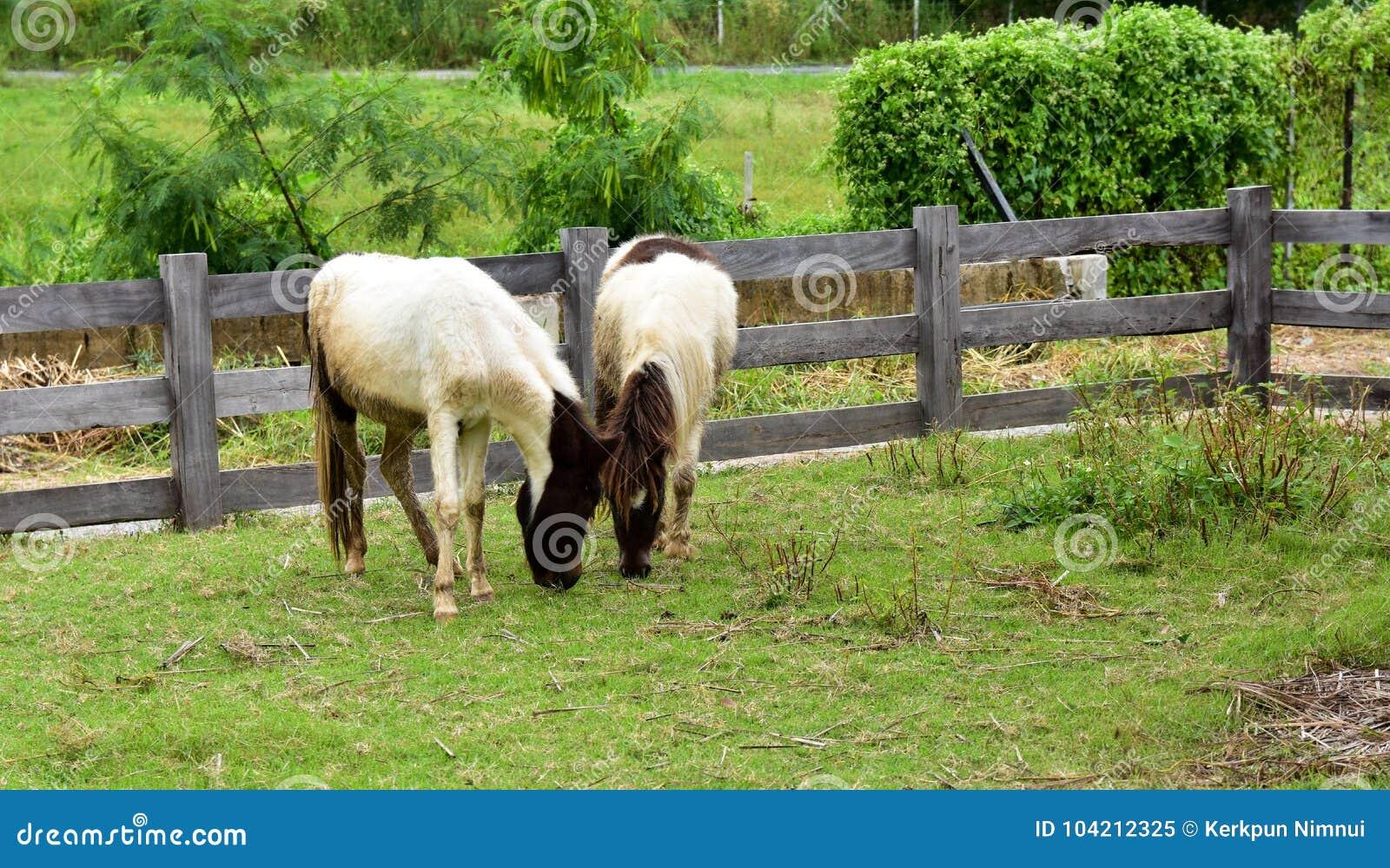Bevallig zwart-wit paard op het gebied