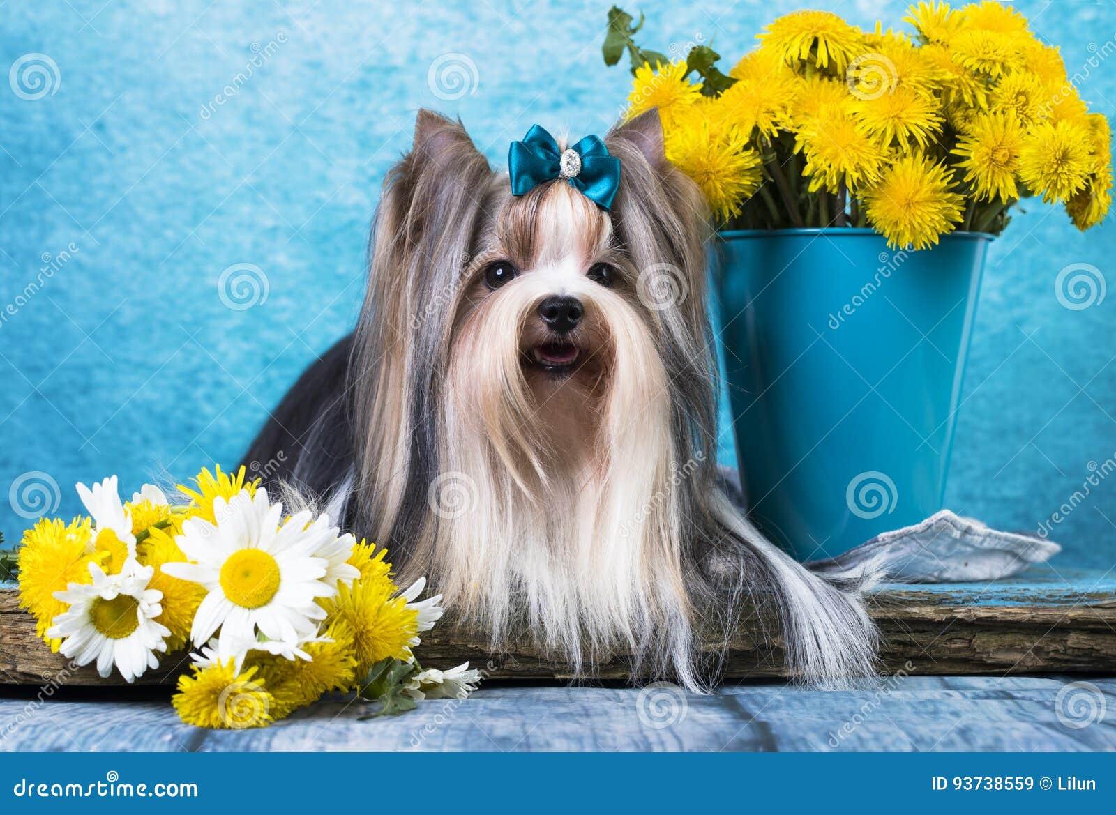 Bever Terrier