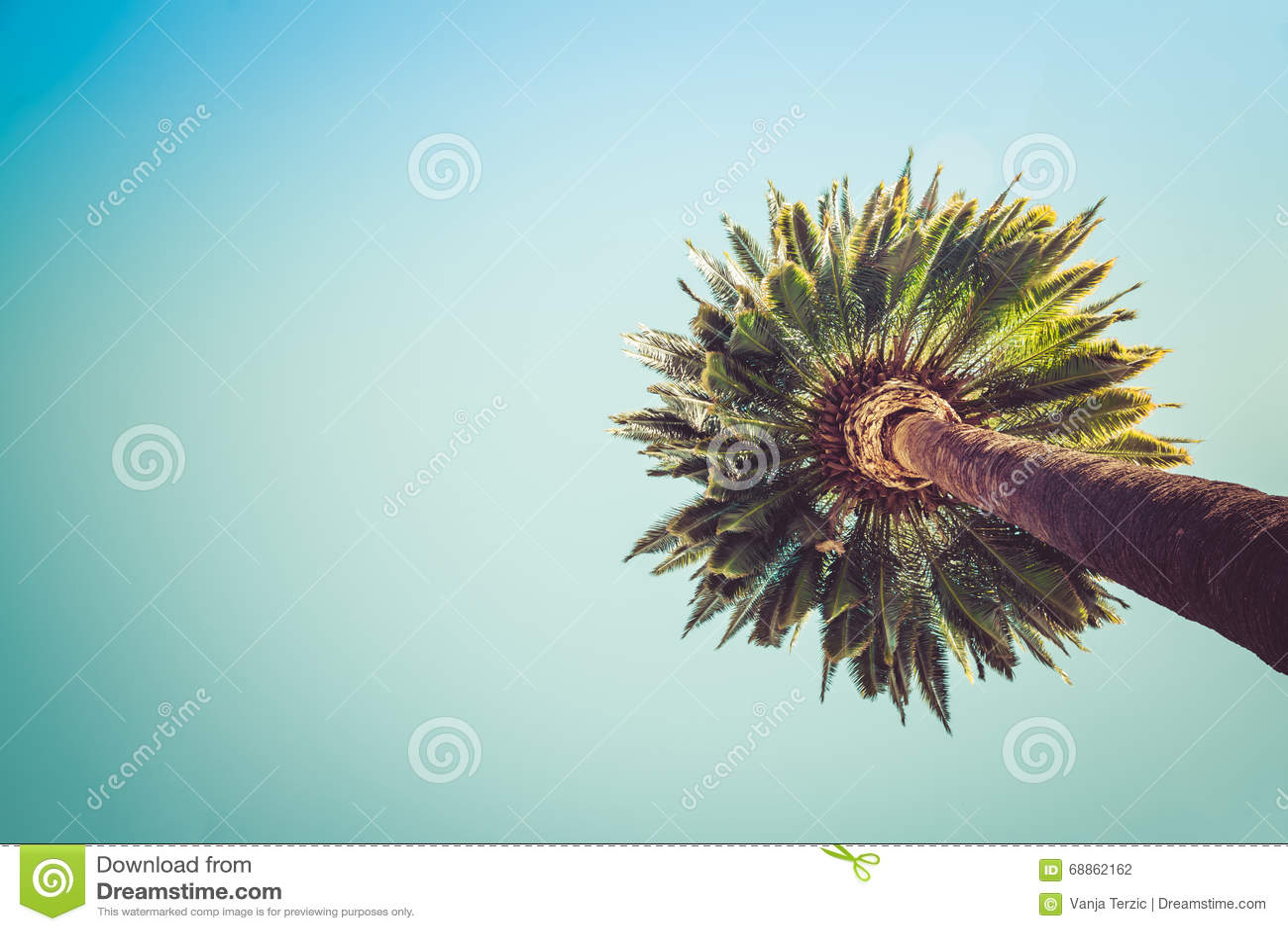 Beverly Hills Palms Trees Vintage