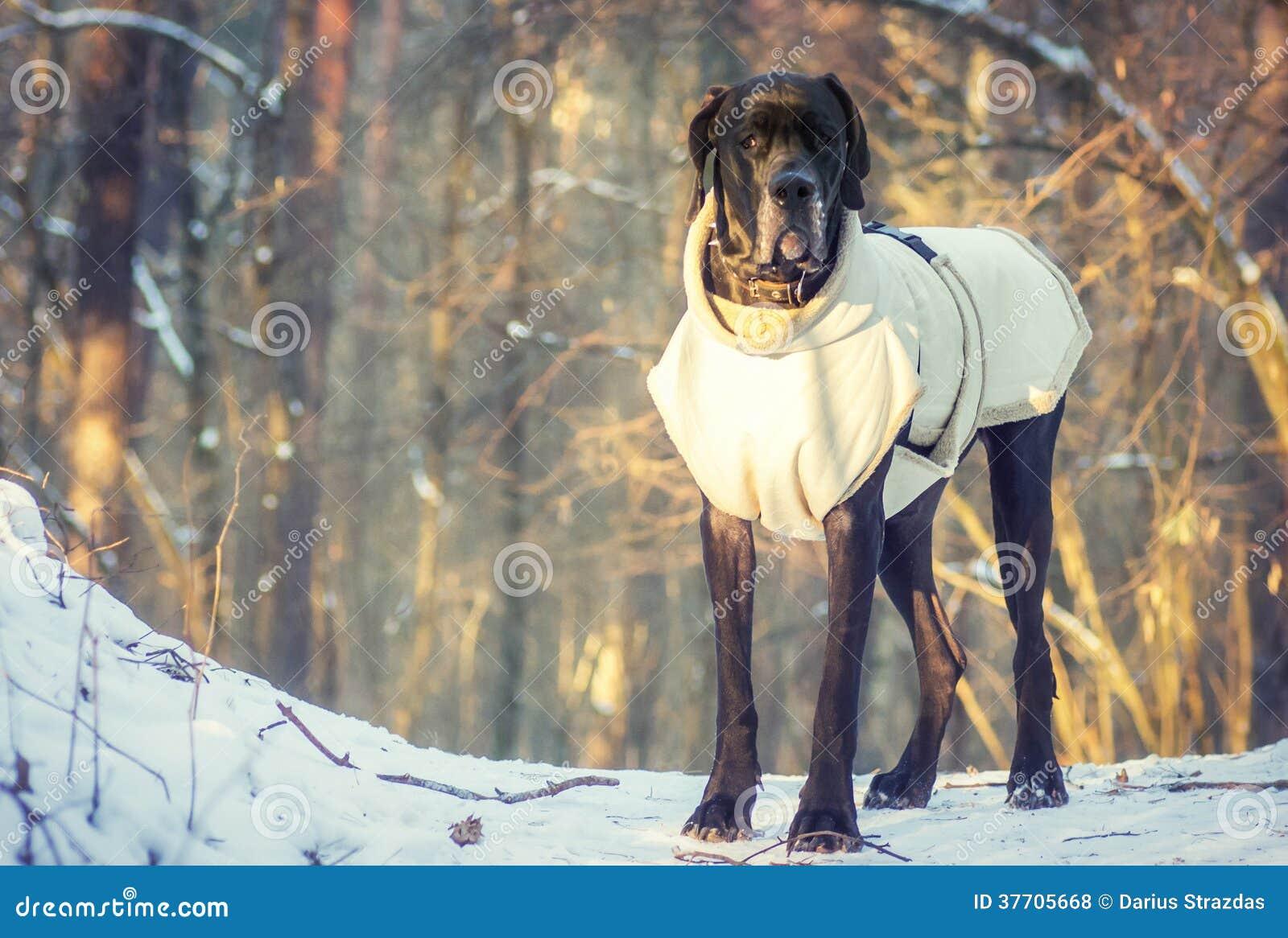 Bevindende hond in het bos