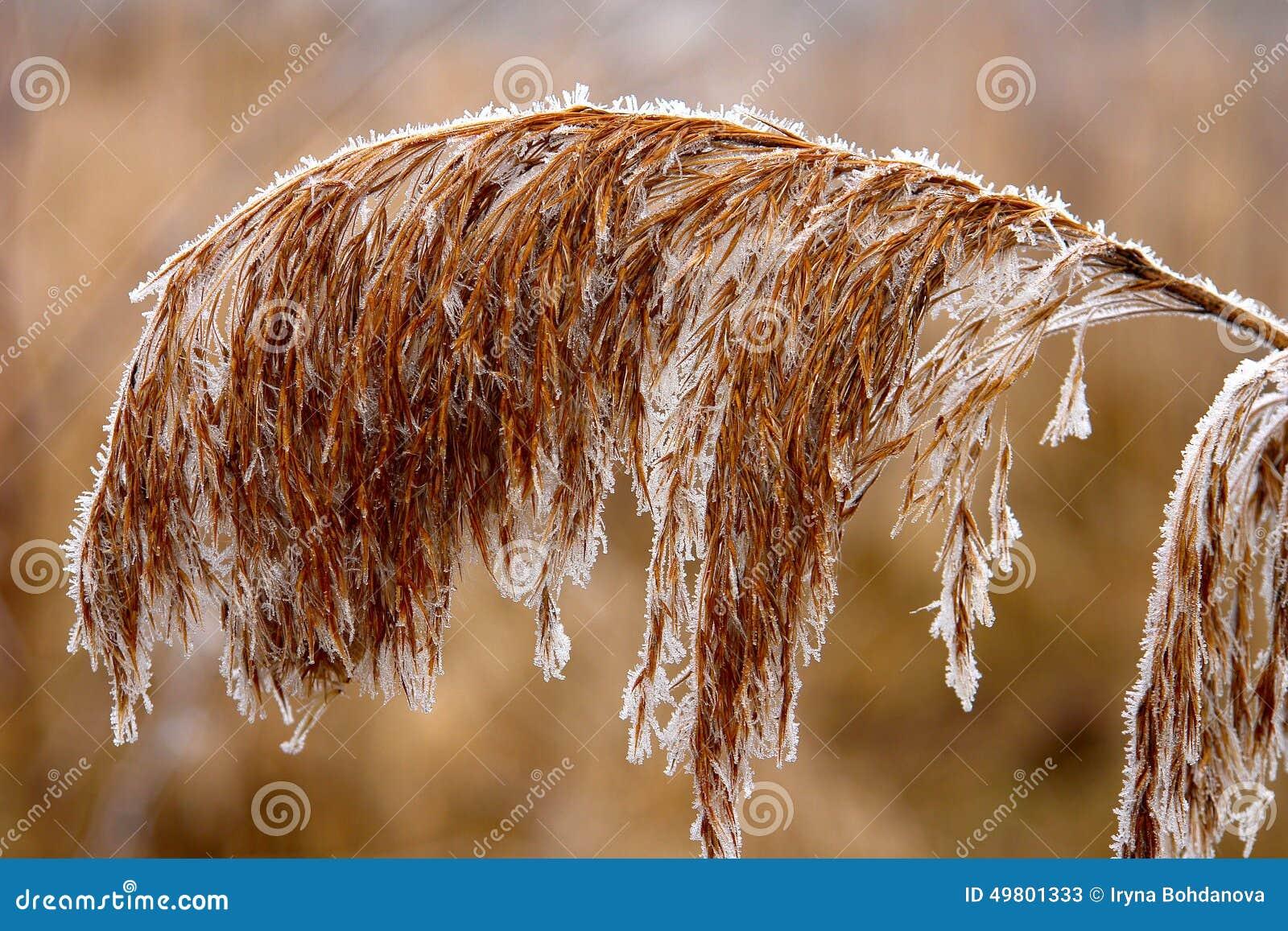 Bevroren Bloemen