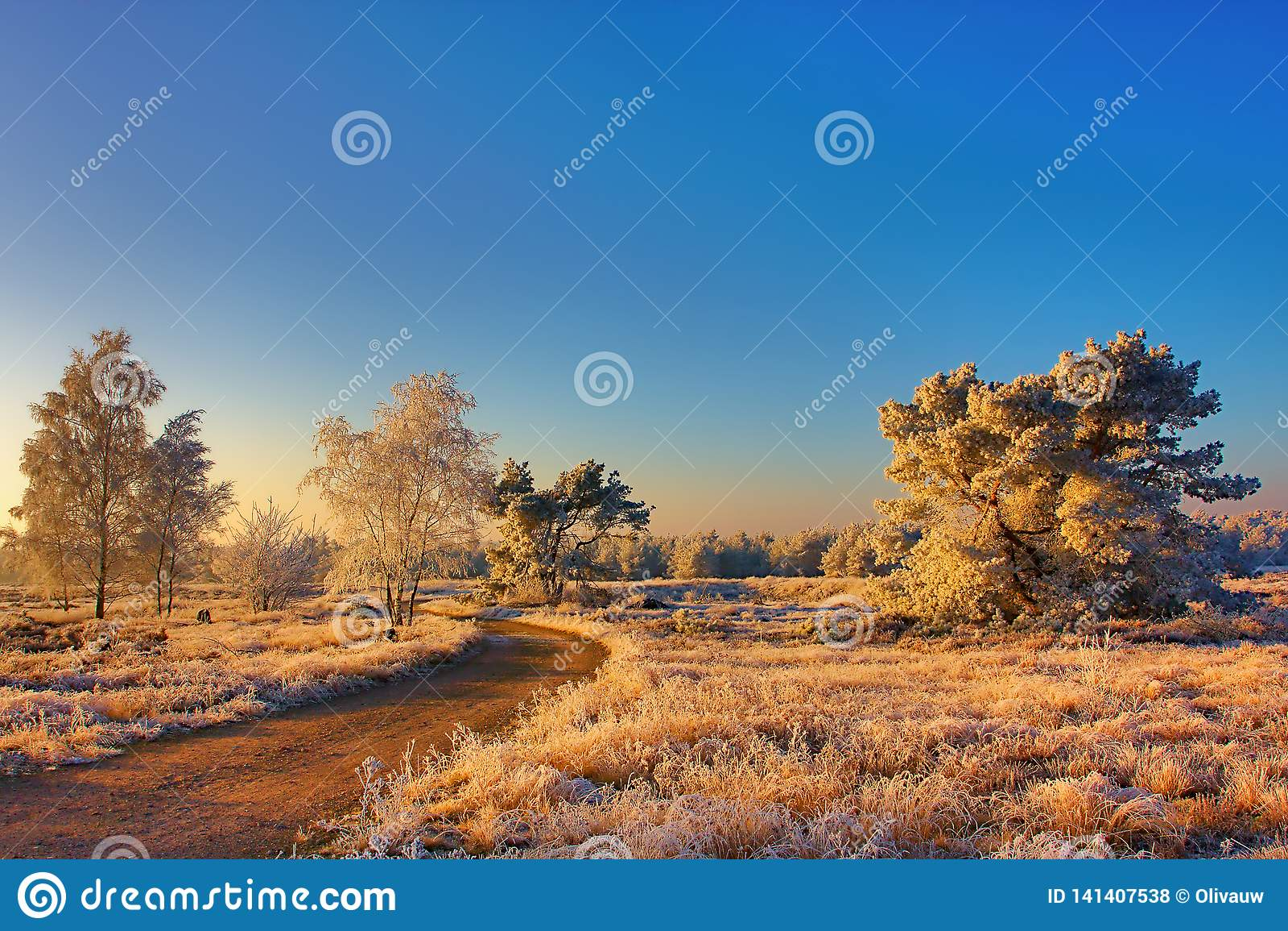 Bevroren landschap in het ochtendlicht
