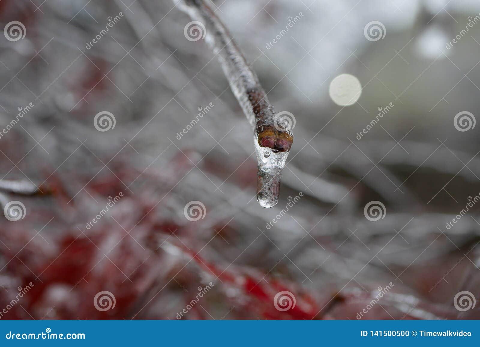 Bevroren Waterdruppeltje op Verglaasde Stam