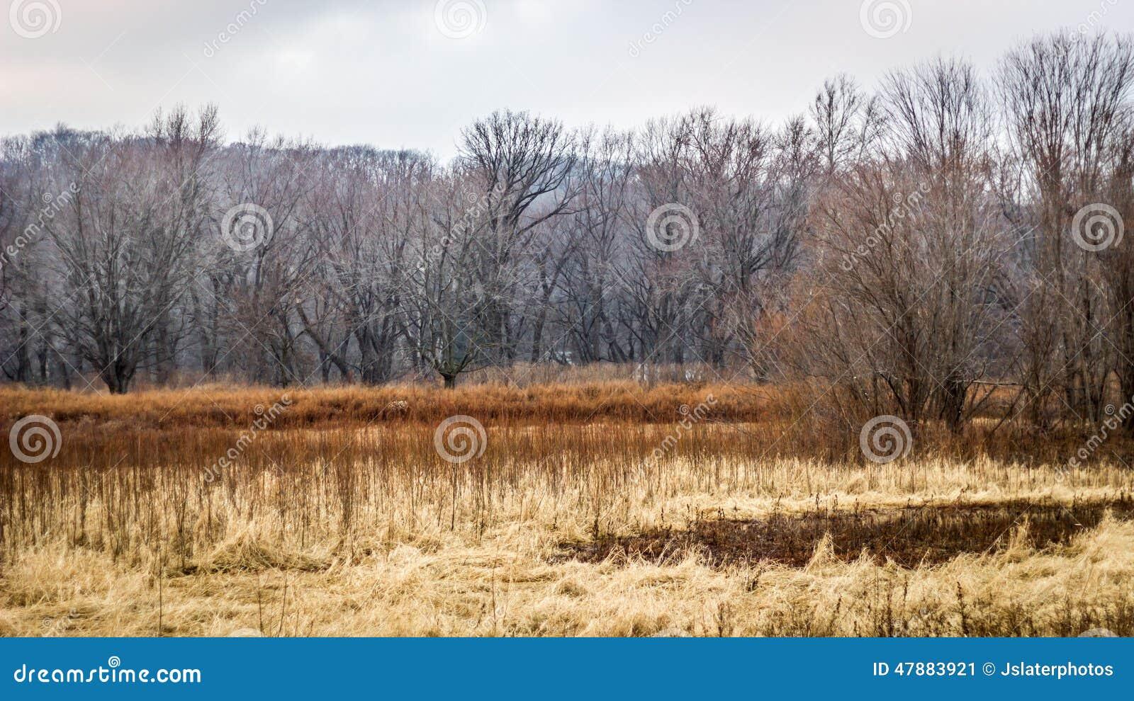 Bevuxen golfbana med den illavarslande skogen
