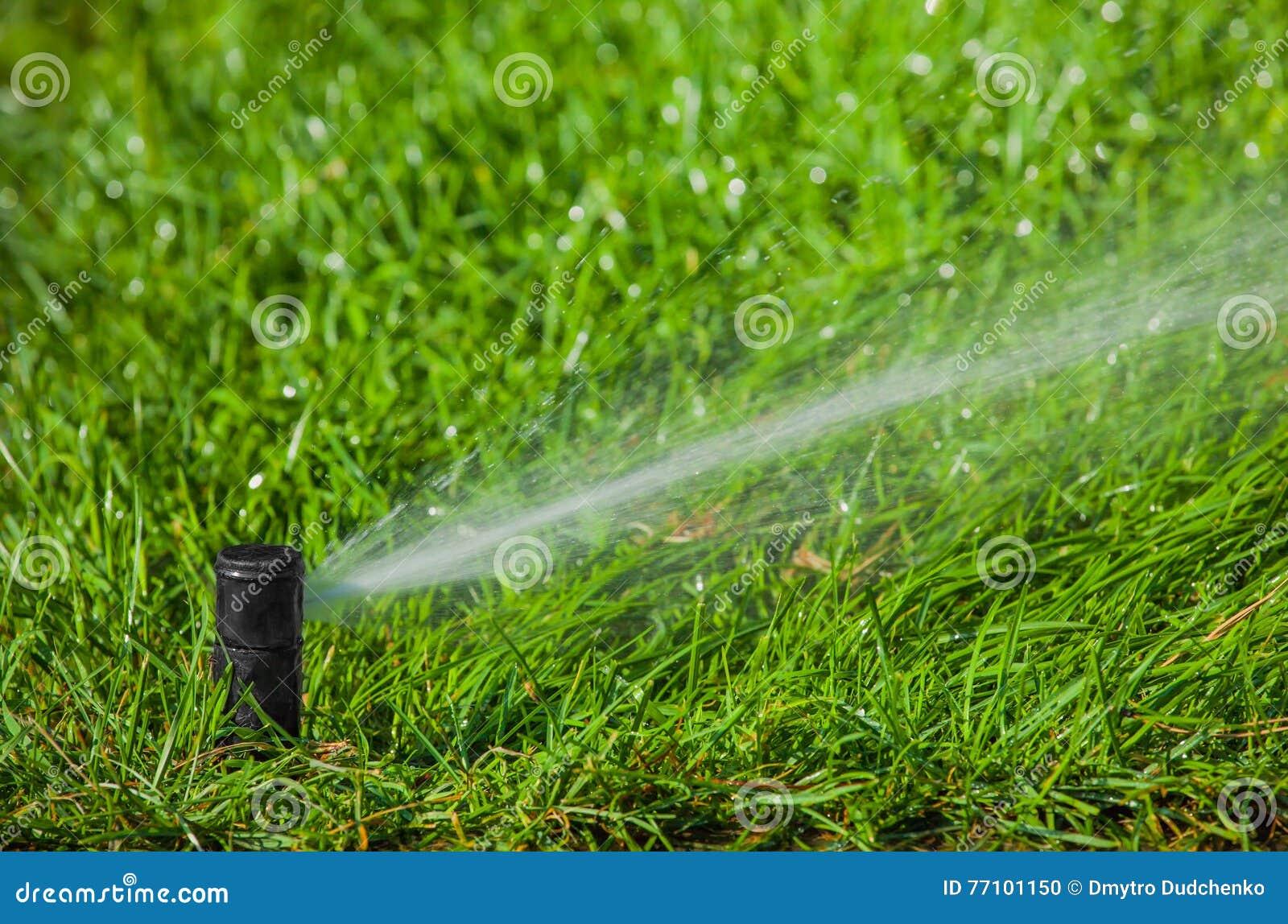 Rasen Bewässerungssystem bewässerungssystem das den rasen wässert stockfoto bild 77101150