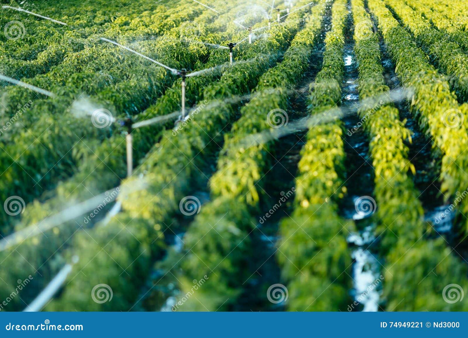 Bewässerungssystem in der Funktion