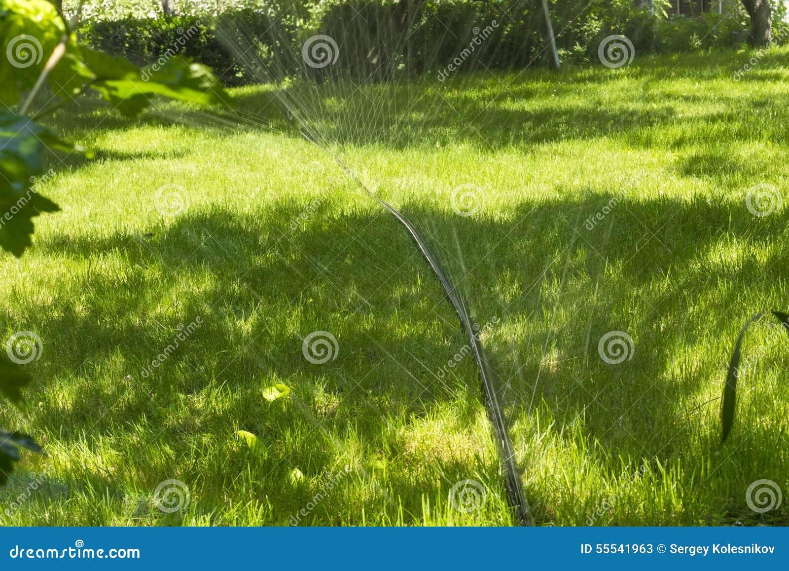 Rasen Bewässerungssystem bewässerungssystem für den rasen stockbild bild 55541963