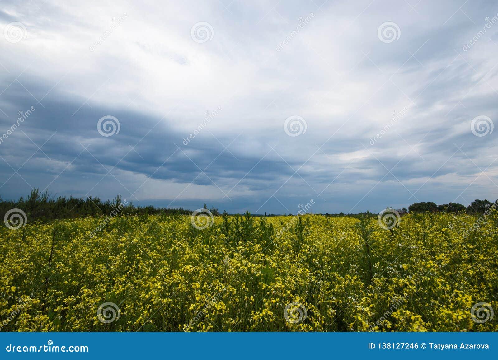 Bewölktes Himmelfeld wild Drastischer Naturhintergrund Farbige handgemachte Abbildung Bunte Frühlingslandschaft Dunkelblauer Wolk