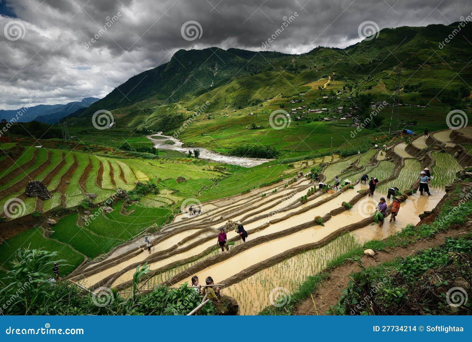 Bewohner des Arbeitens in den Reisterrassen