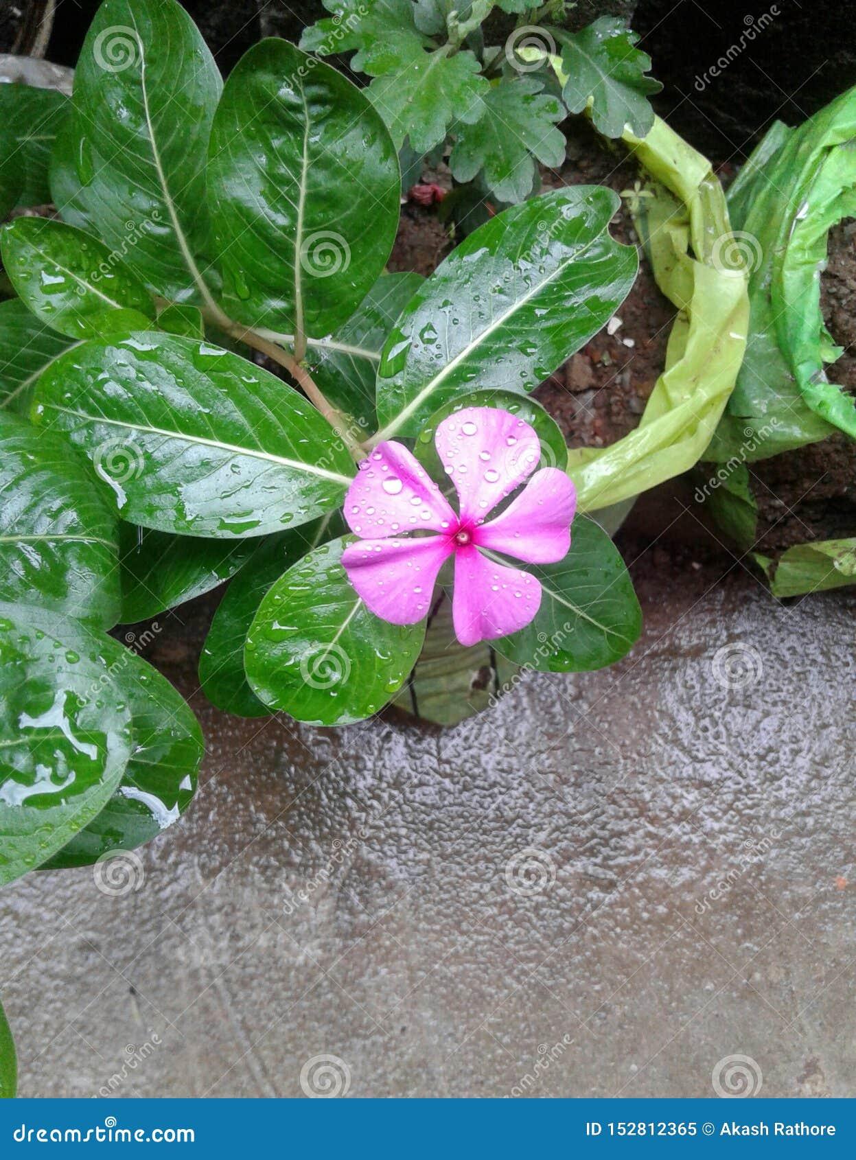 Bezaubernde kleine Blume in unserem Haus