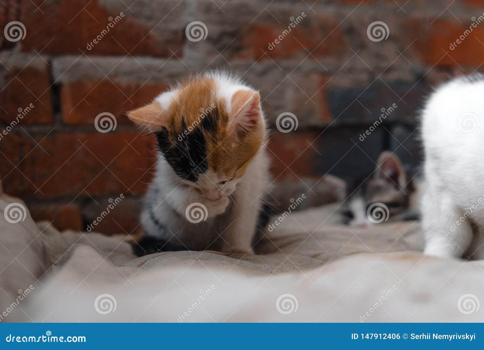 Bezdomna figlarka, samotna, kot, koty ulica potrzeba przyjaciele