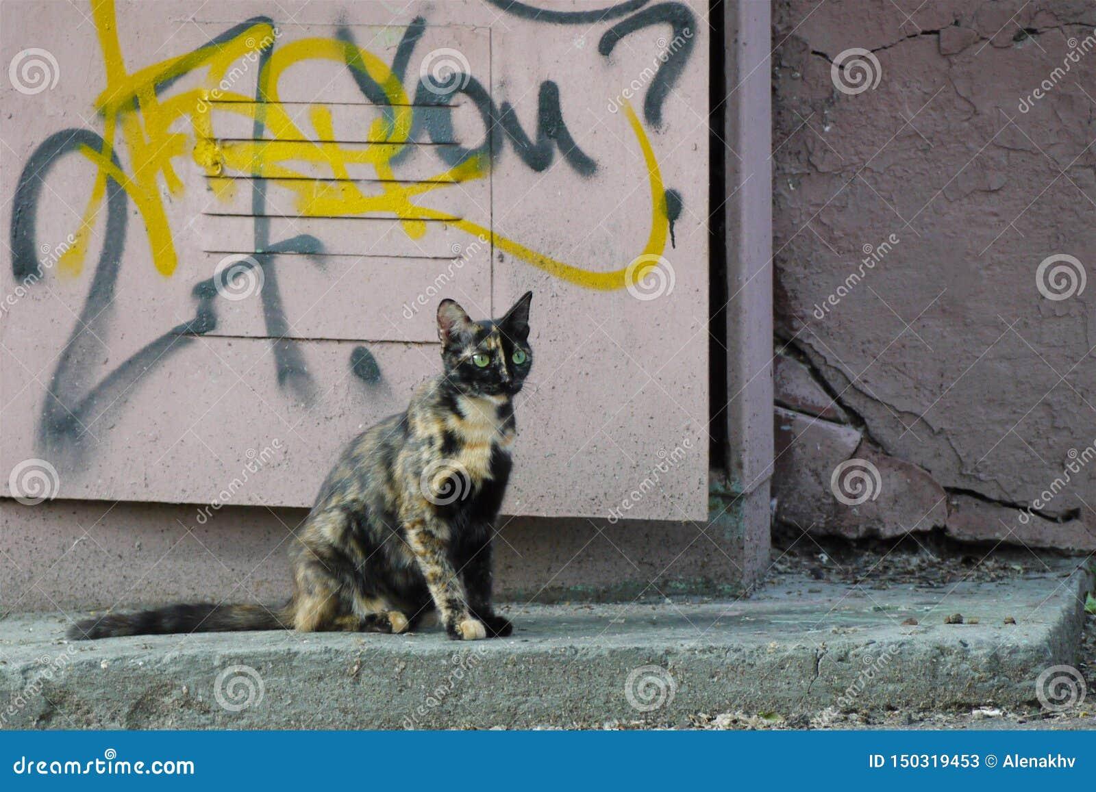 Bezdomny koloru kot z zielonymi oczami siedzi w ulicie