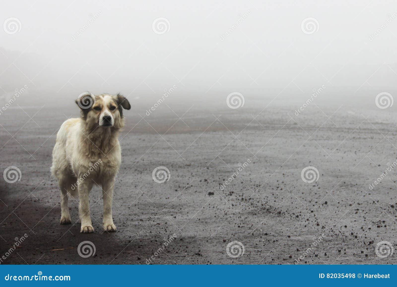 Bezdomny przybłąkanego psa czekanie na drodze