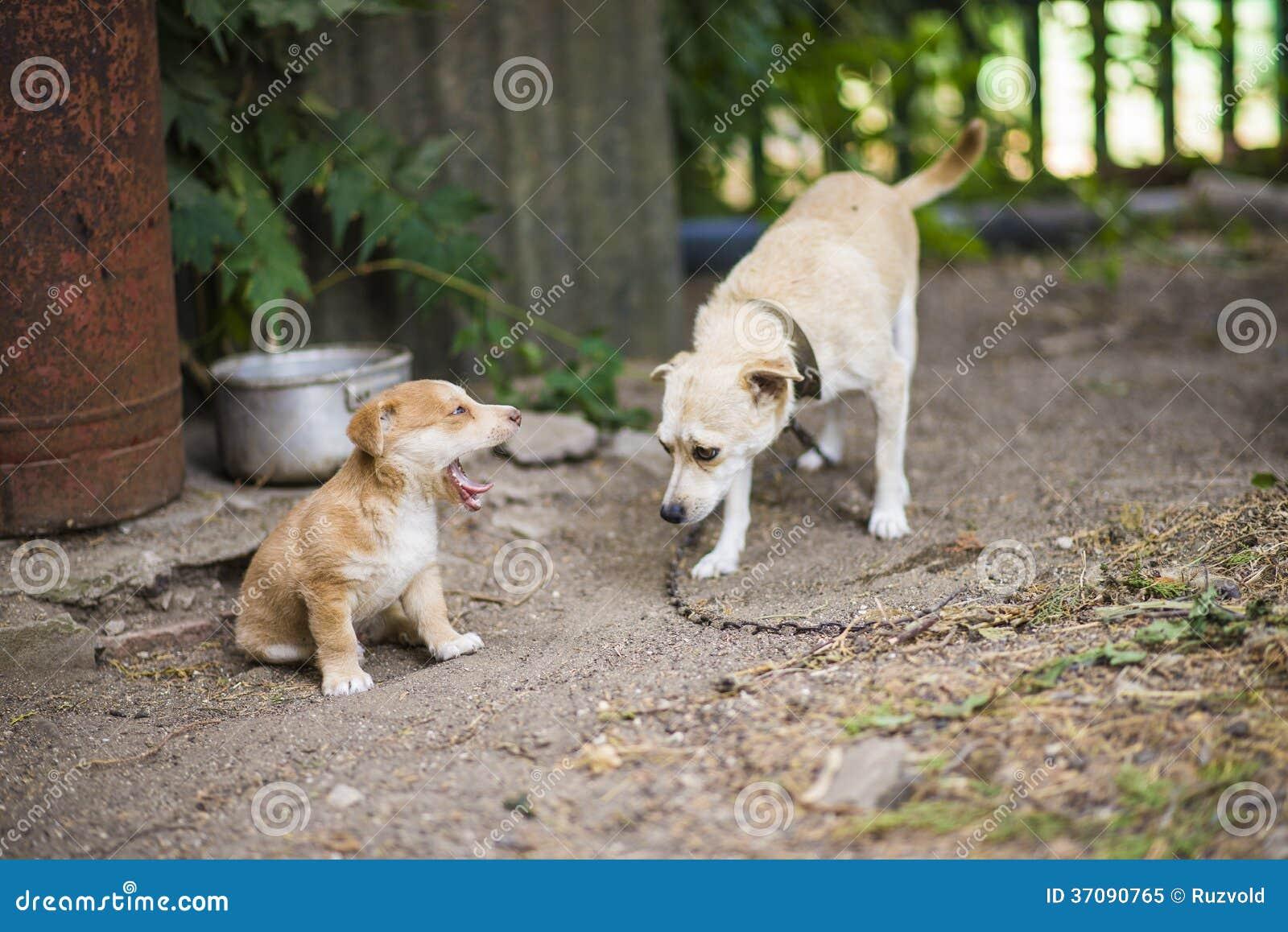 Download Bezdomny Smutny Pies Z Szczeniakiem Obraz Stock - Obraz złożonej z plenerowy, mały: 37090765