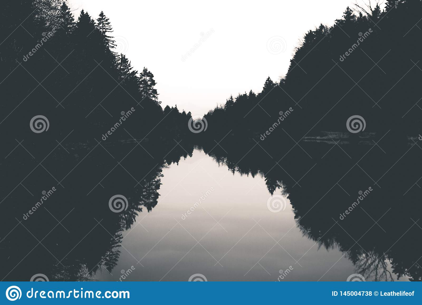 Bezinning van bos in het meer