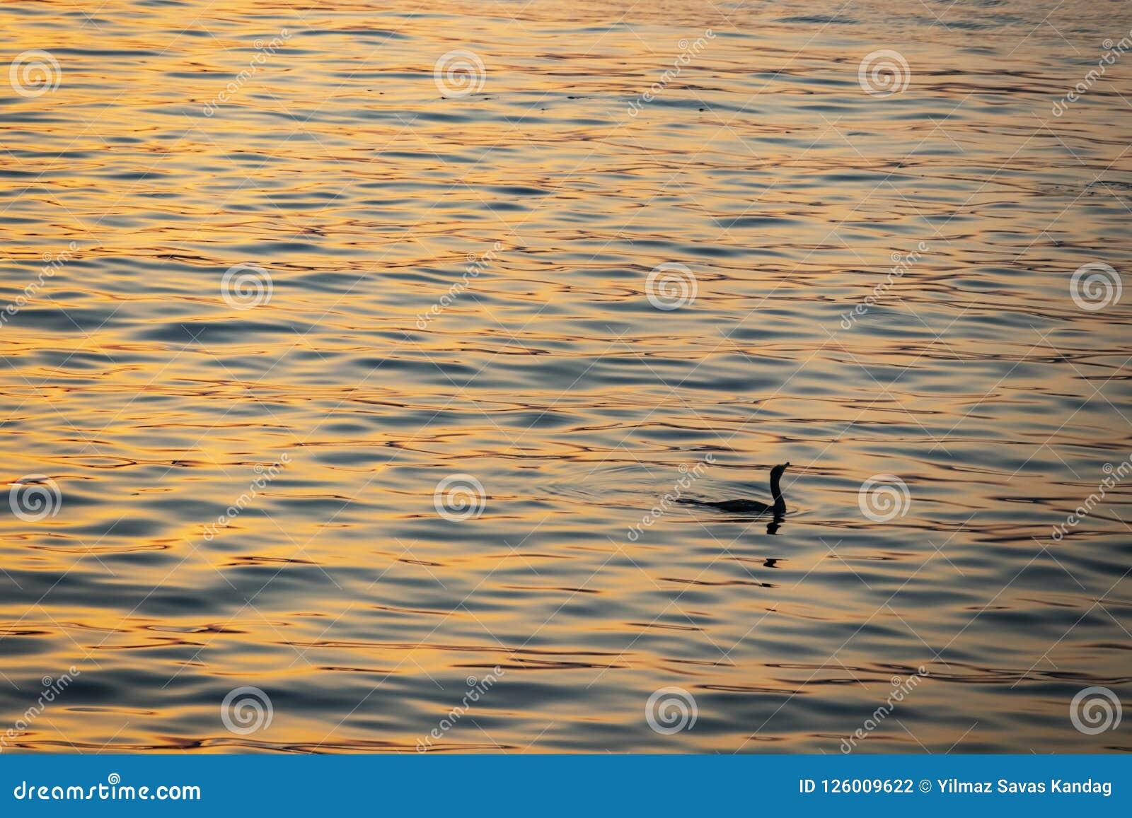 Bezinning van de zon in het water en de aalscholver in het overzees