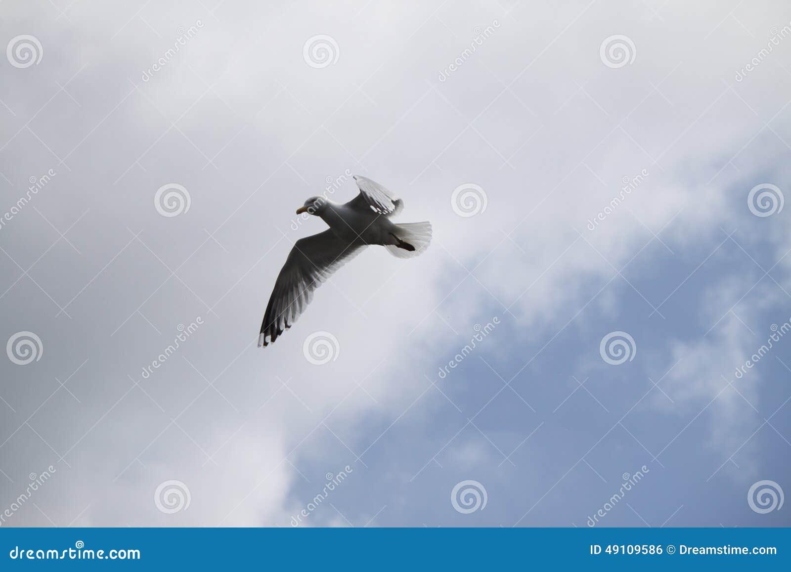 Bezpłatny ptak