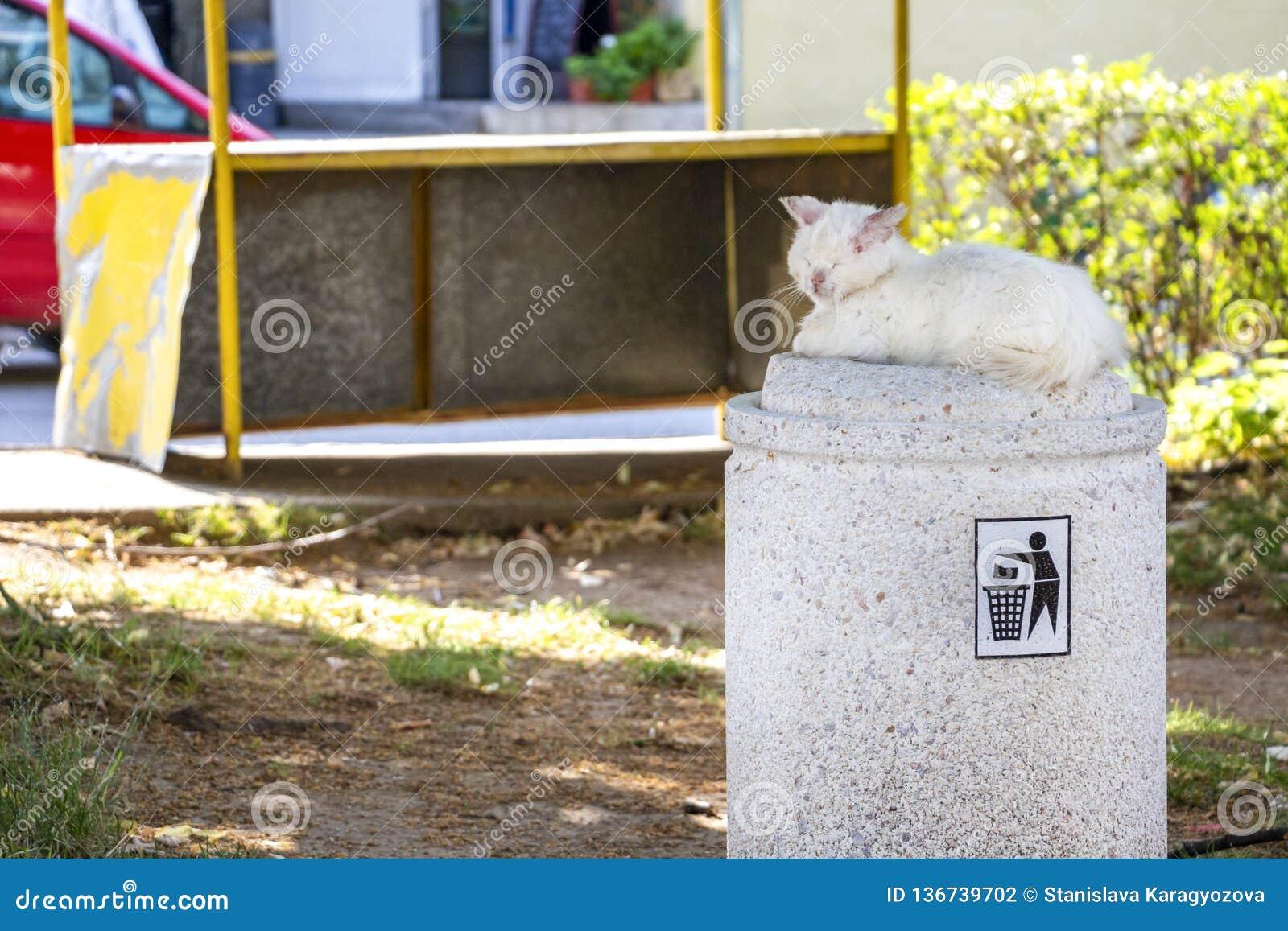 Bezpański raniący i chory biały długowłosy tomcat lying on the beach na ulicznym kuble na śmieci
