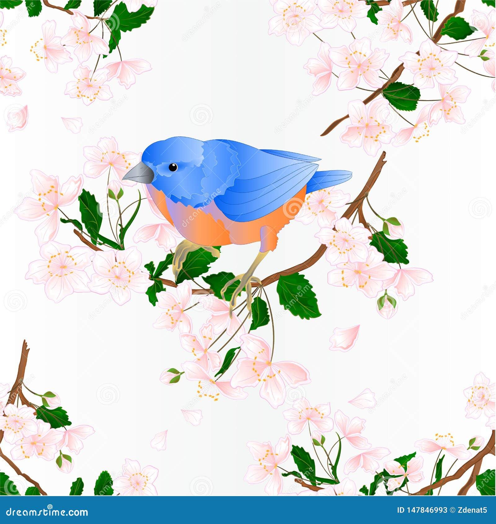 Bezszwowego tekstury ptasiego Bluebird drozda mali songbirdons na gałęziastym dzikiej wiśni dzikiej wiśni wiosny tła błękitnym ro