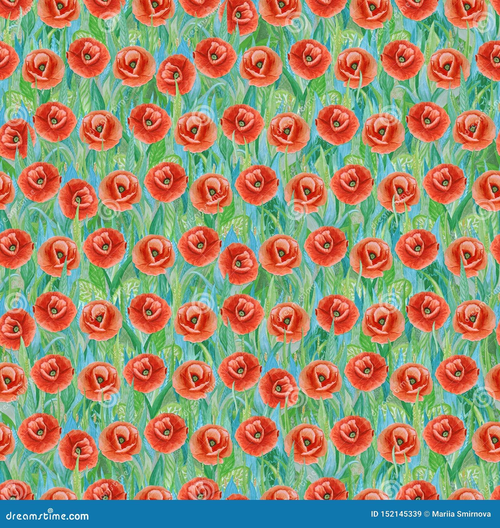 Bezszwowy lato wzór czerwoni maczki na trawie Kolorowy tło w postaci kwiat halizny
