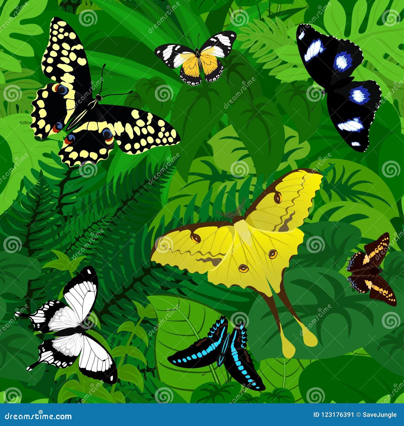 Bezszwowy wektorowy afrykański tropikalny tropikalny las deszczowy dżungli tło z motylami
