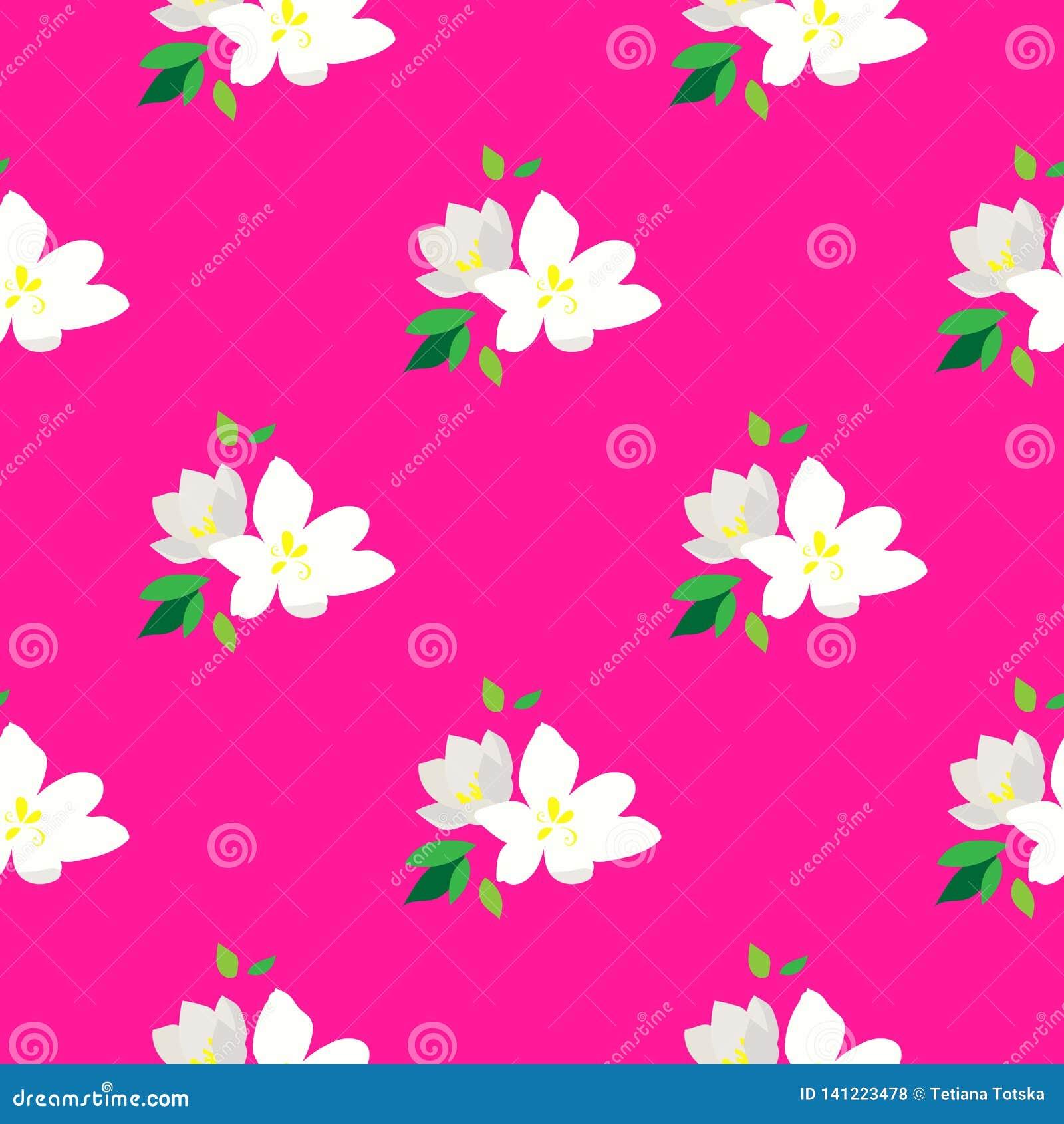 Bezszwowy wzór z kwitnąć gałąź wiśnia Biali kwiaty i pączki na różowym tle cherry tła kwitnącego blisko Japan spring kwiecisty dr