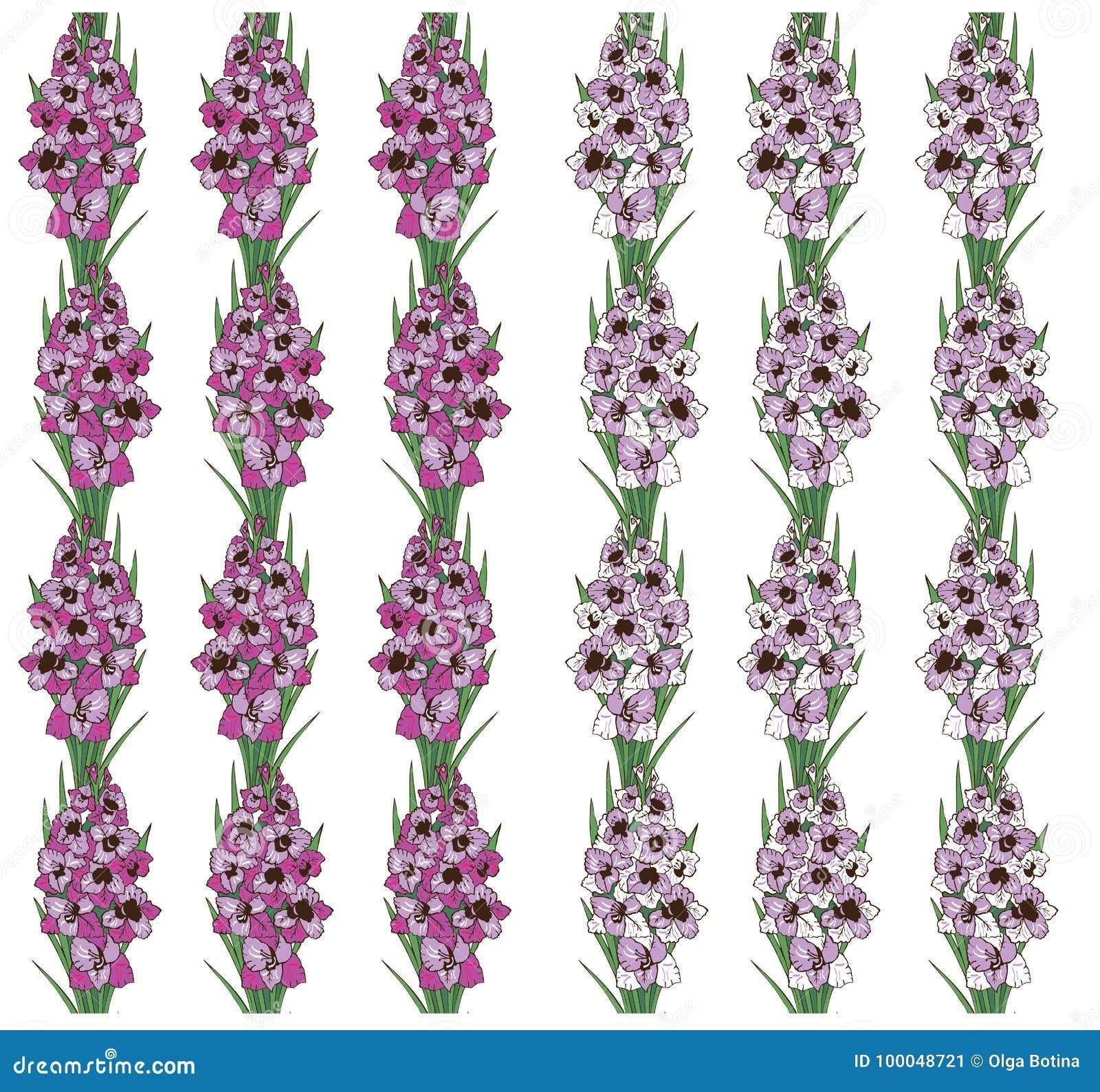 Bezszwowy wzór kwitnie gladiolusa na białym tle