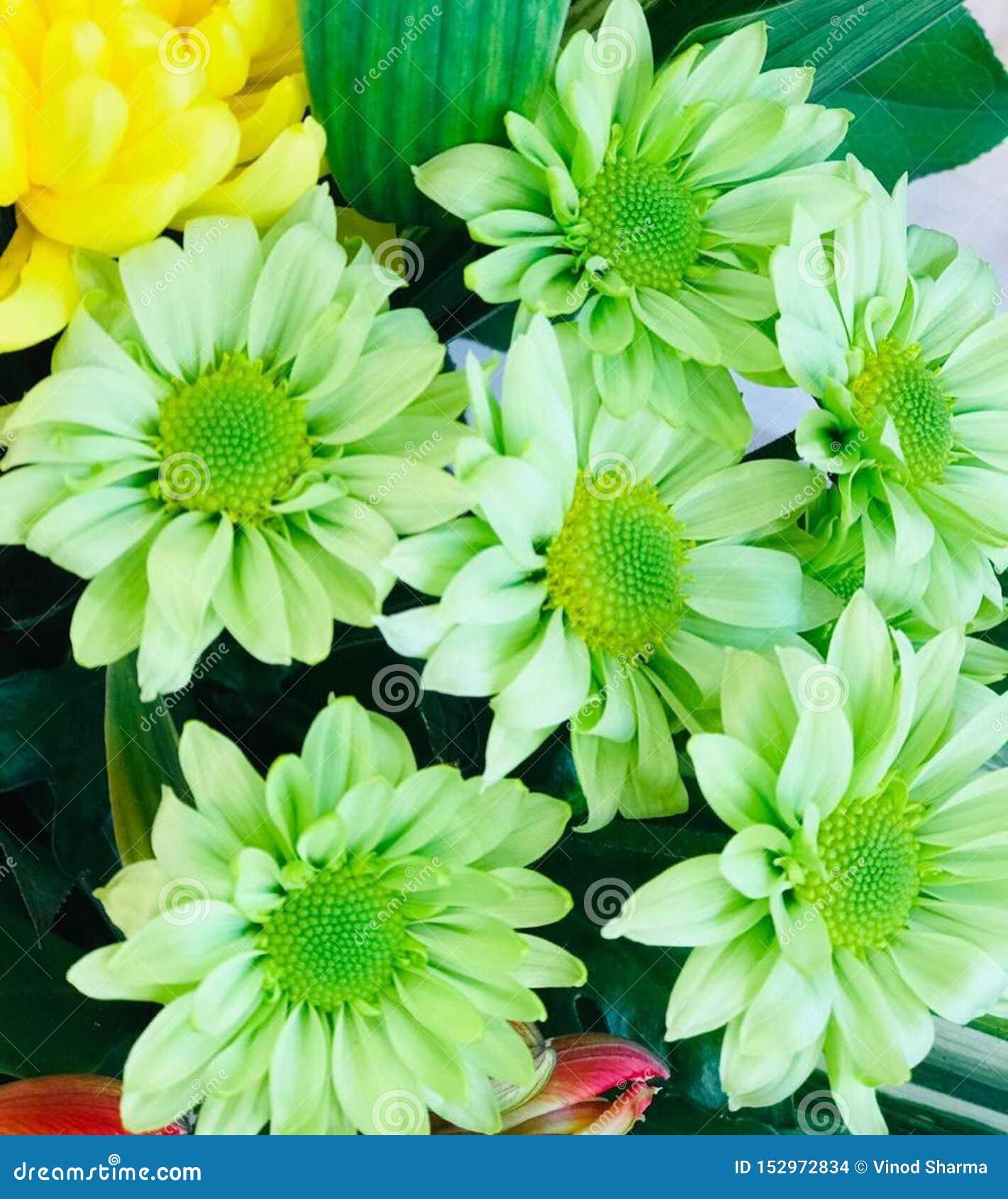 Bezszwowy wzór zieleni tulipany na zielonym tle