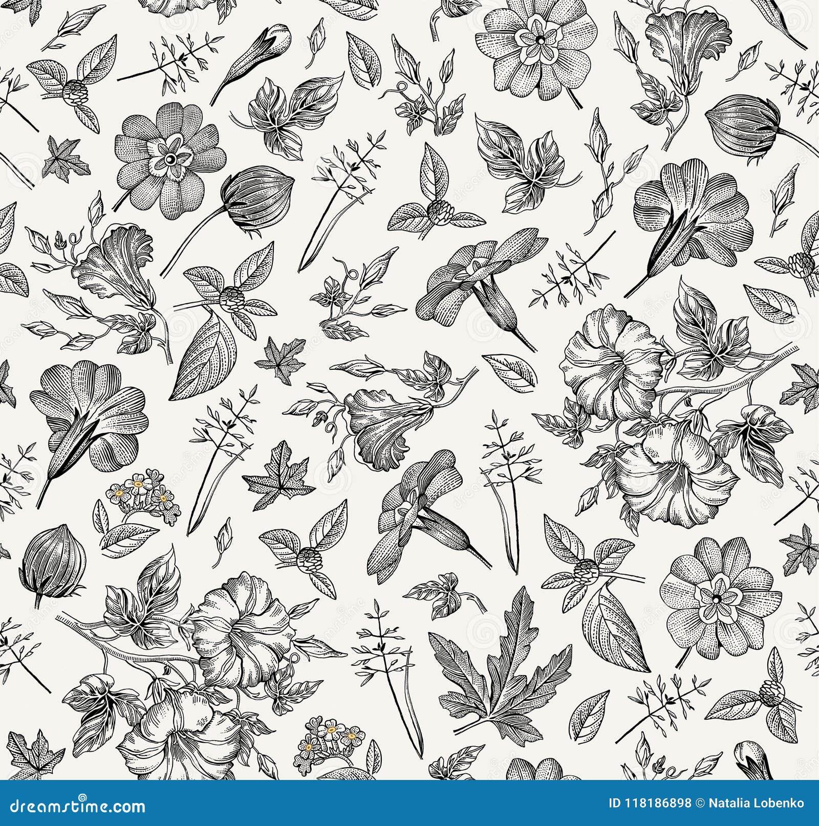 Bezszwowy wzoru Realistyczni odosobneni kwiaty Rocznika tła petuni primavera hibisc rytownictwa Rysunkowy wektor