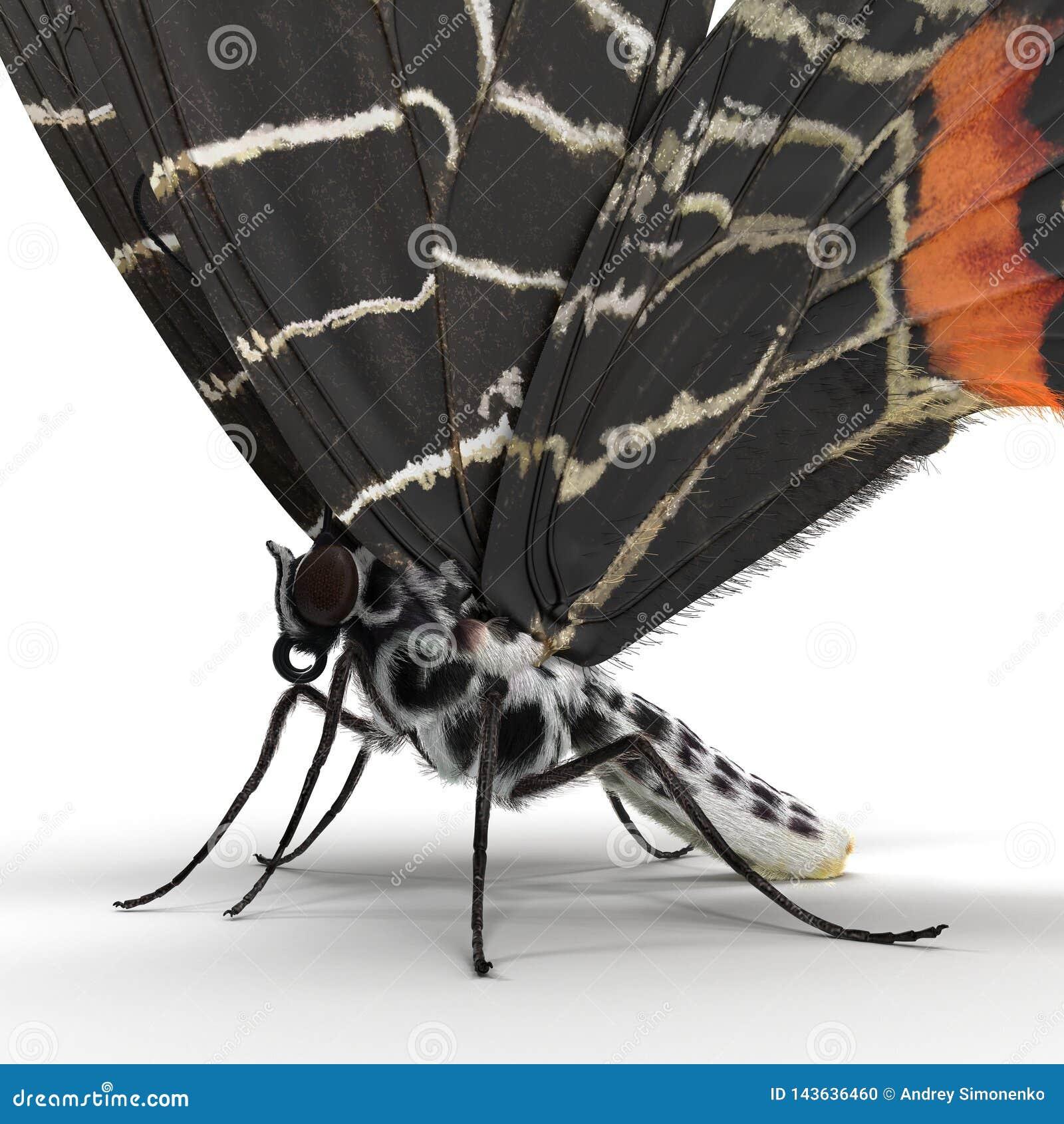 Bhutanitis Lidderdalii or Bhutan Glory Butterfly Swallowtail Isolated on White Background 3D Illustration