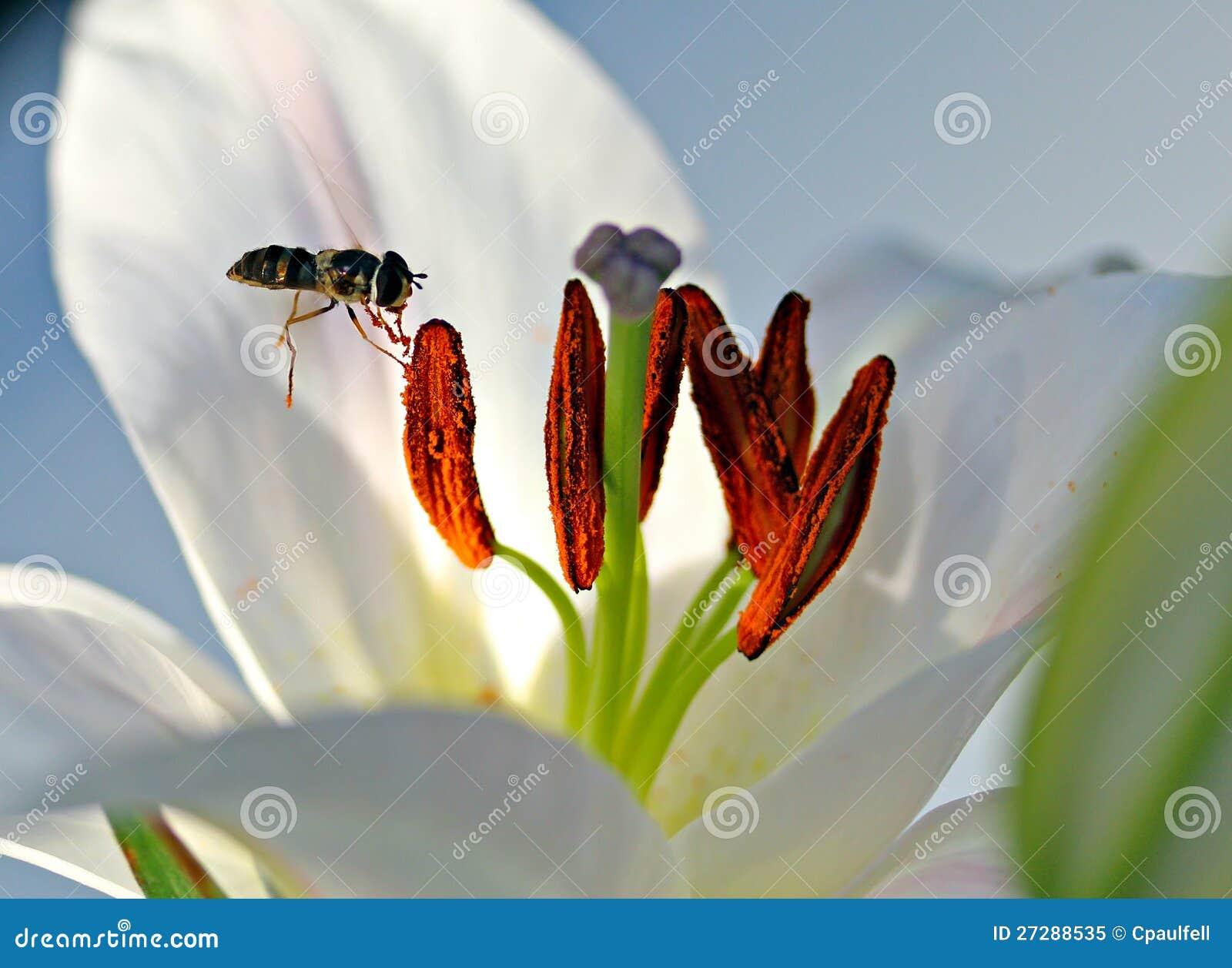 Bi och Pollen