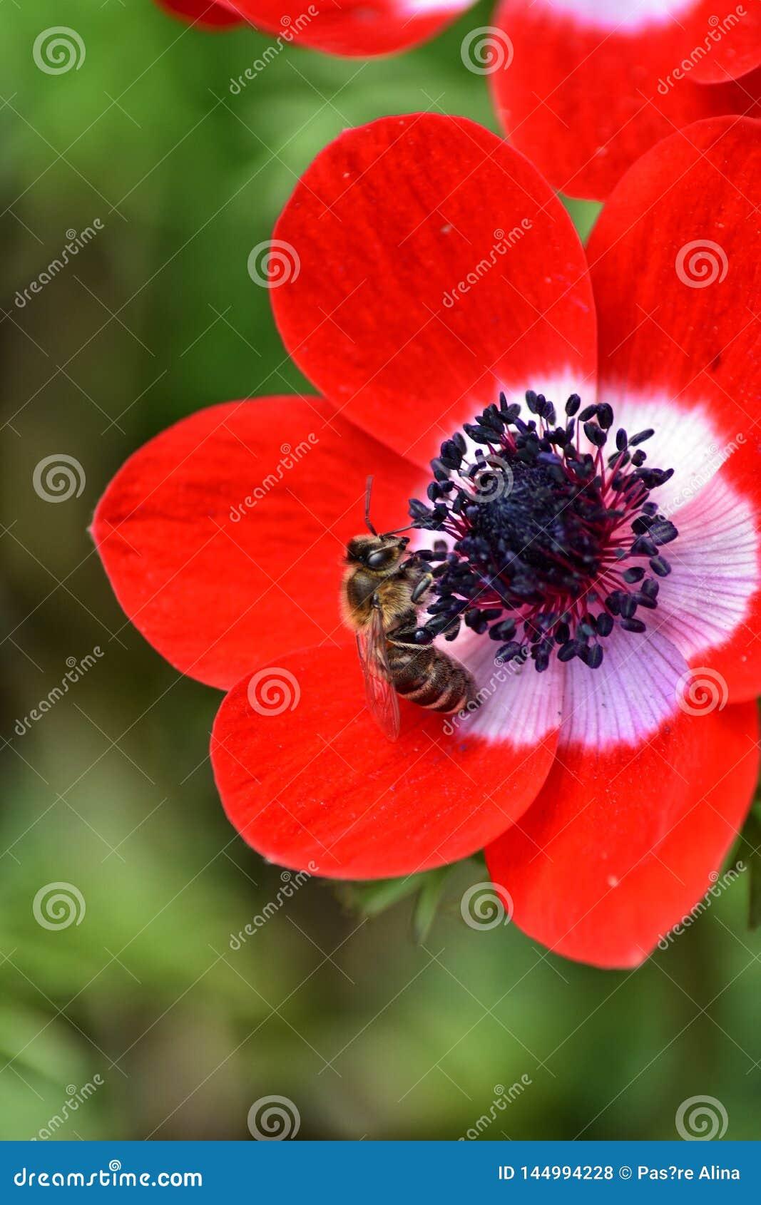 Bi p? en blomma