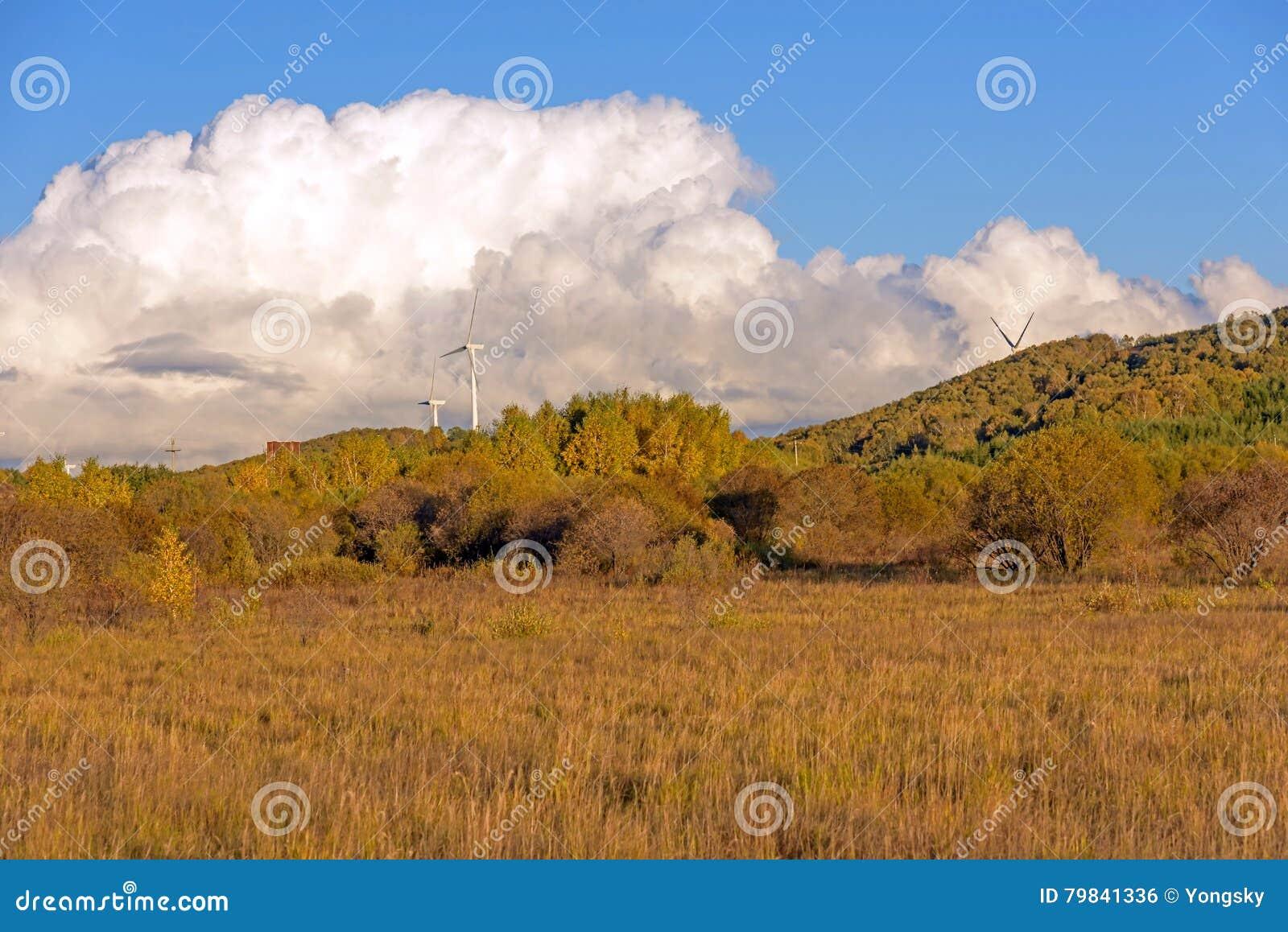 Biała brzoza i obszar trawiasty